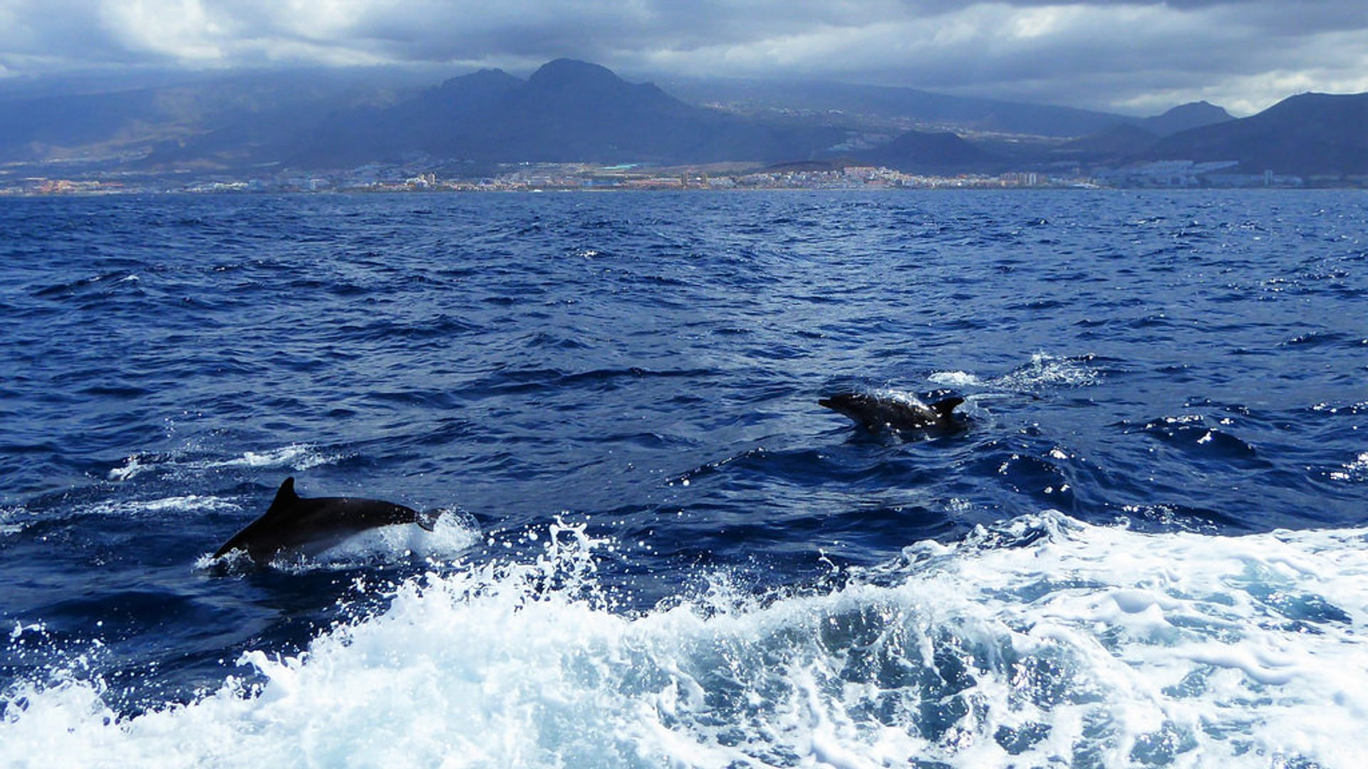 Whale and Dolphin Watching in Canary Islands - Best Season 2020