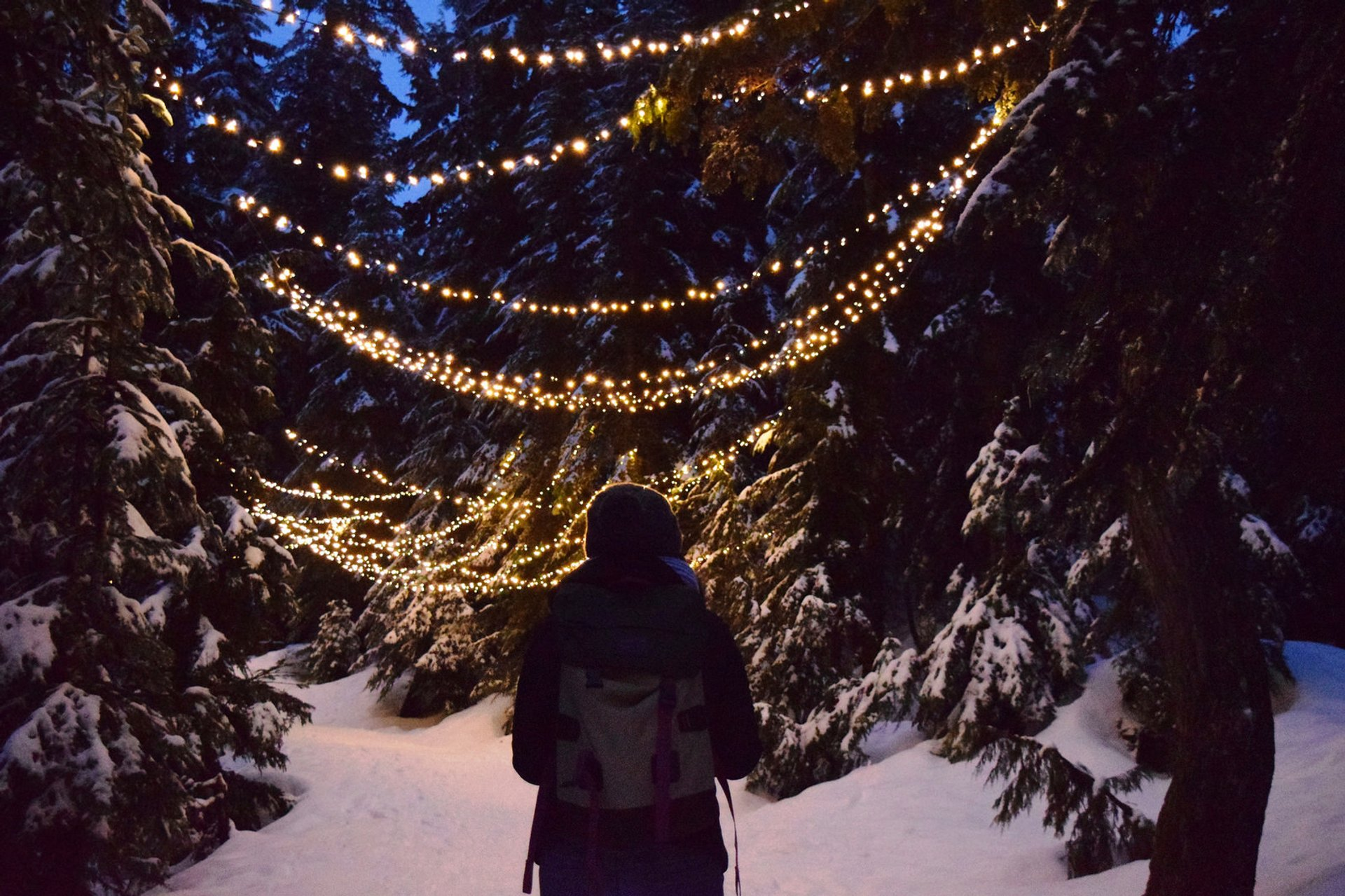 Grouse Mountain Light Walk in Vancouver 2019 - Best Time