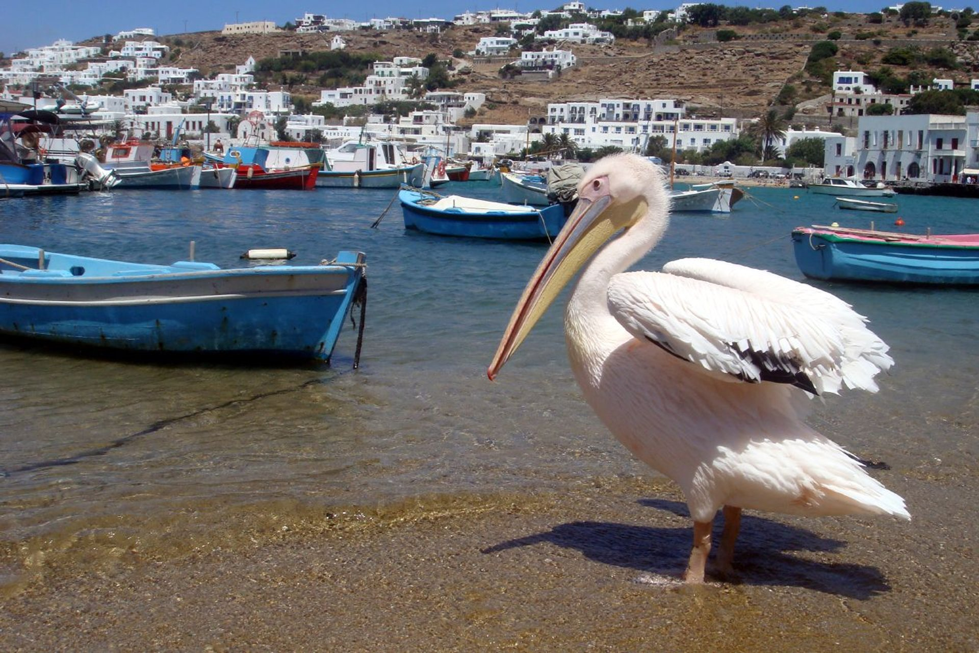 Birdwatching in Greece 2020 - Best Time