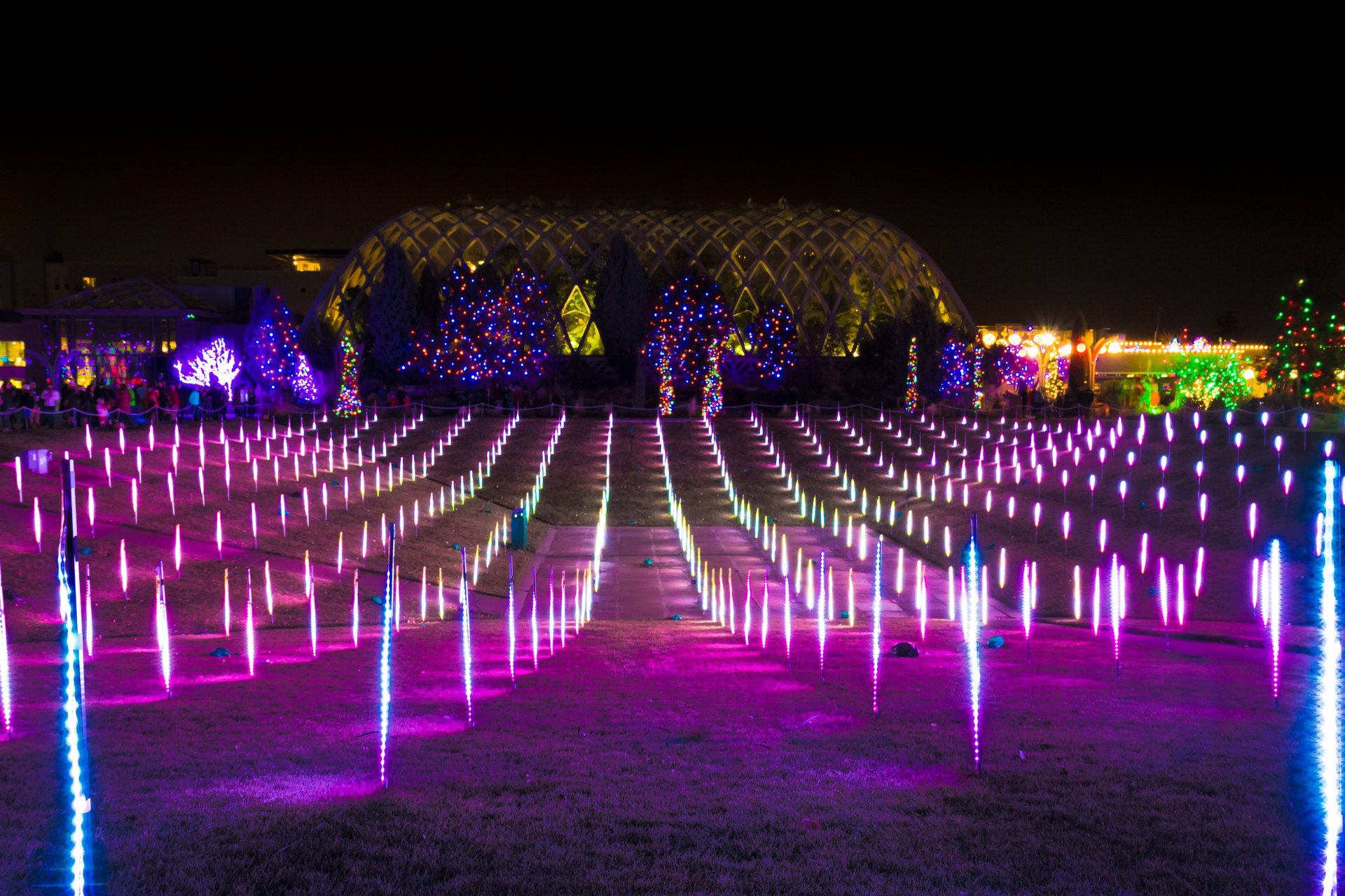 Blossoms of Light at the Denver Botanic Gardens 2020