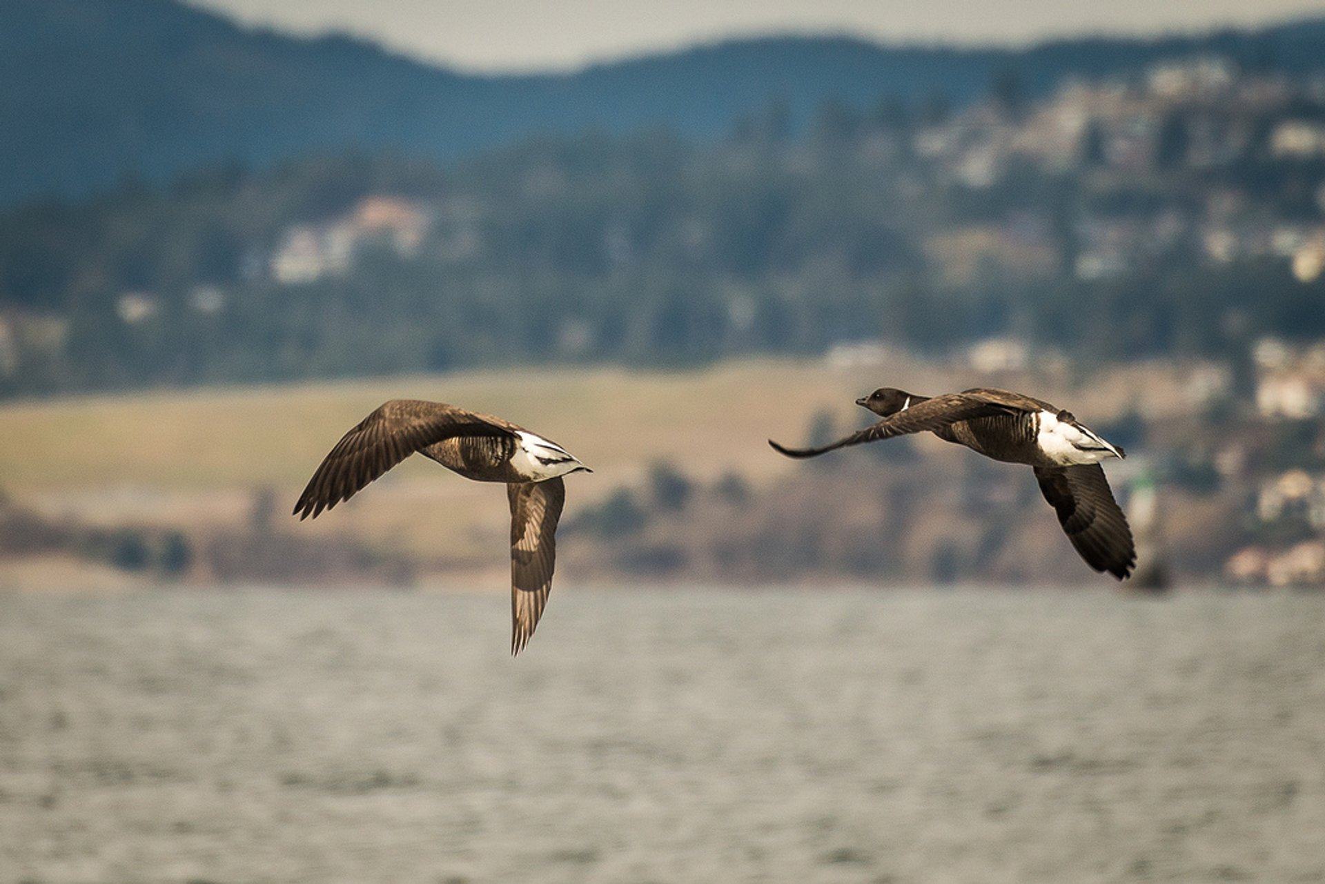 Best time for Birdwatching in British Columbia