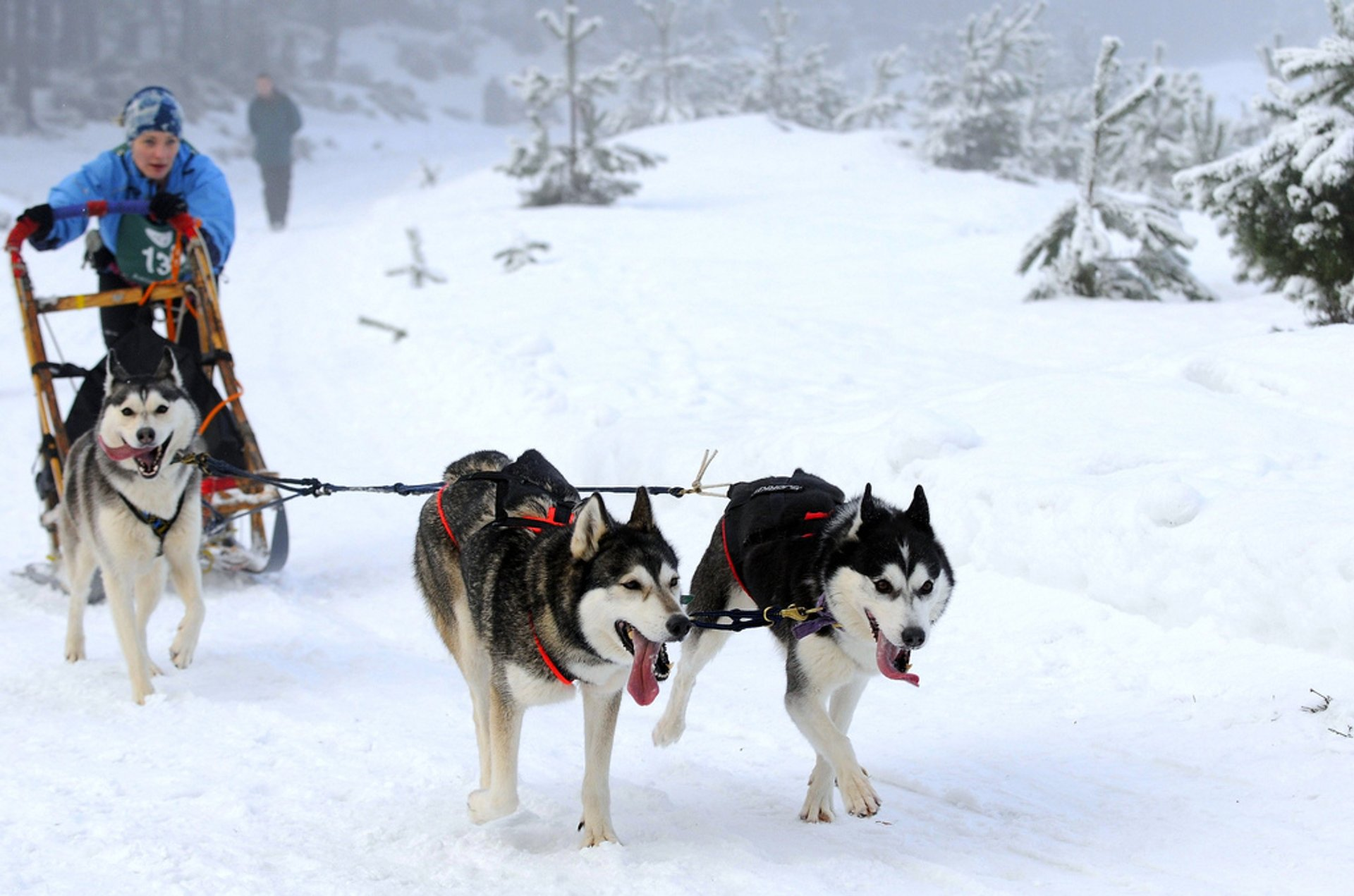 Best time for Dog Sledding in Scotland 2019