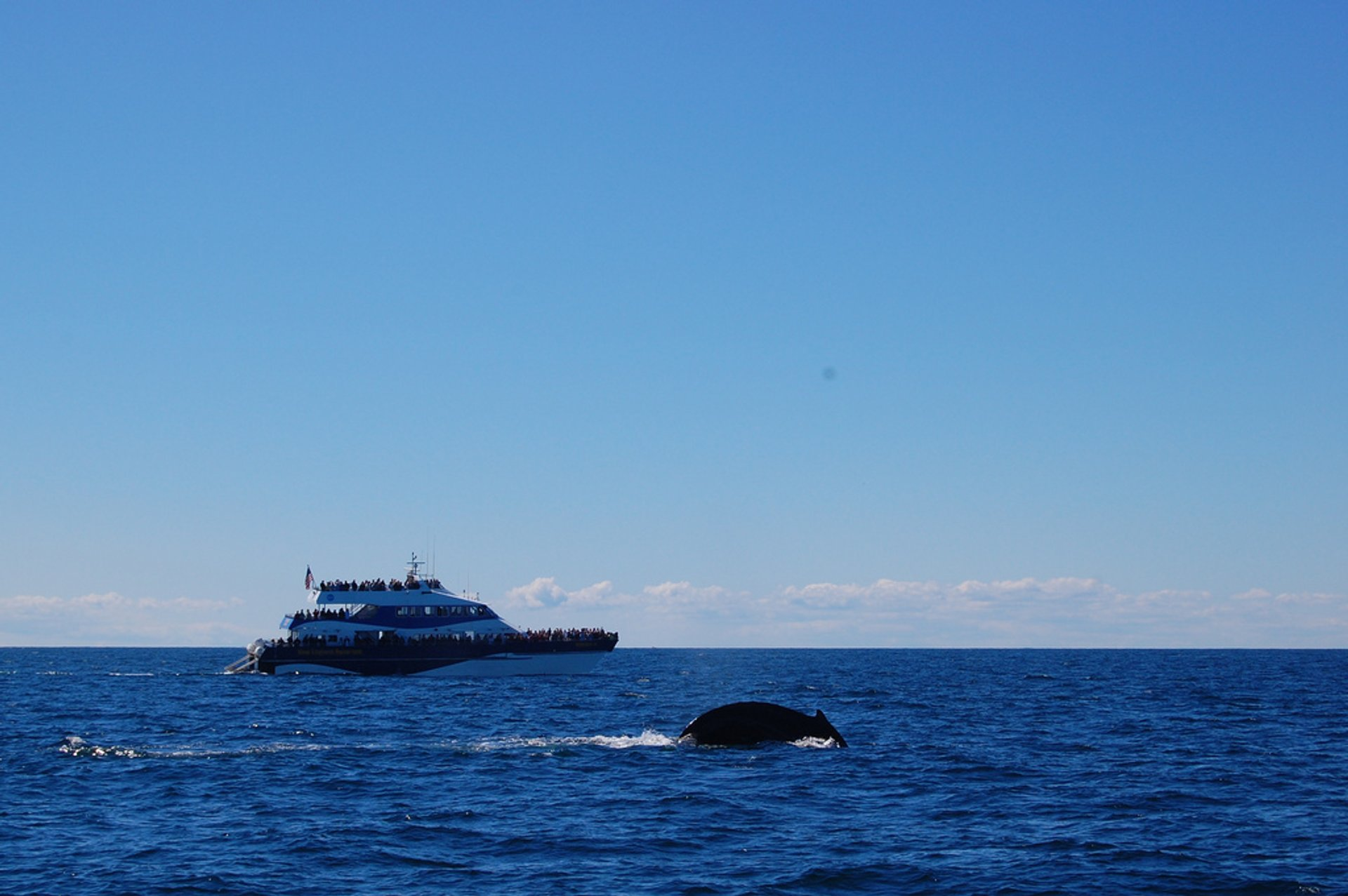 Whale Watching in Boston - Best Season 2019