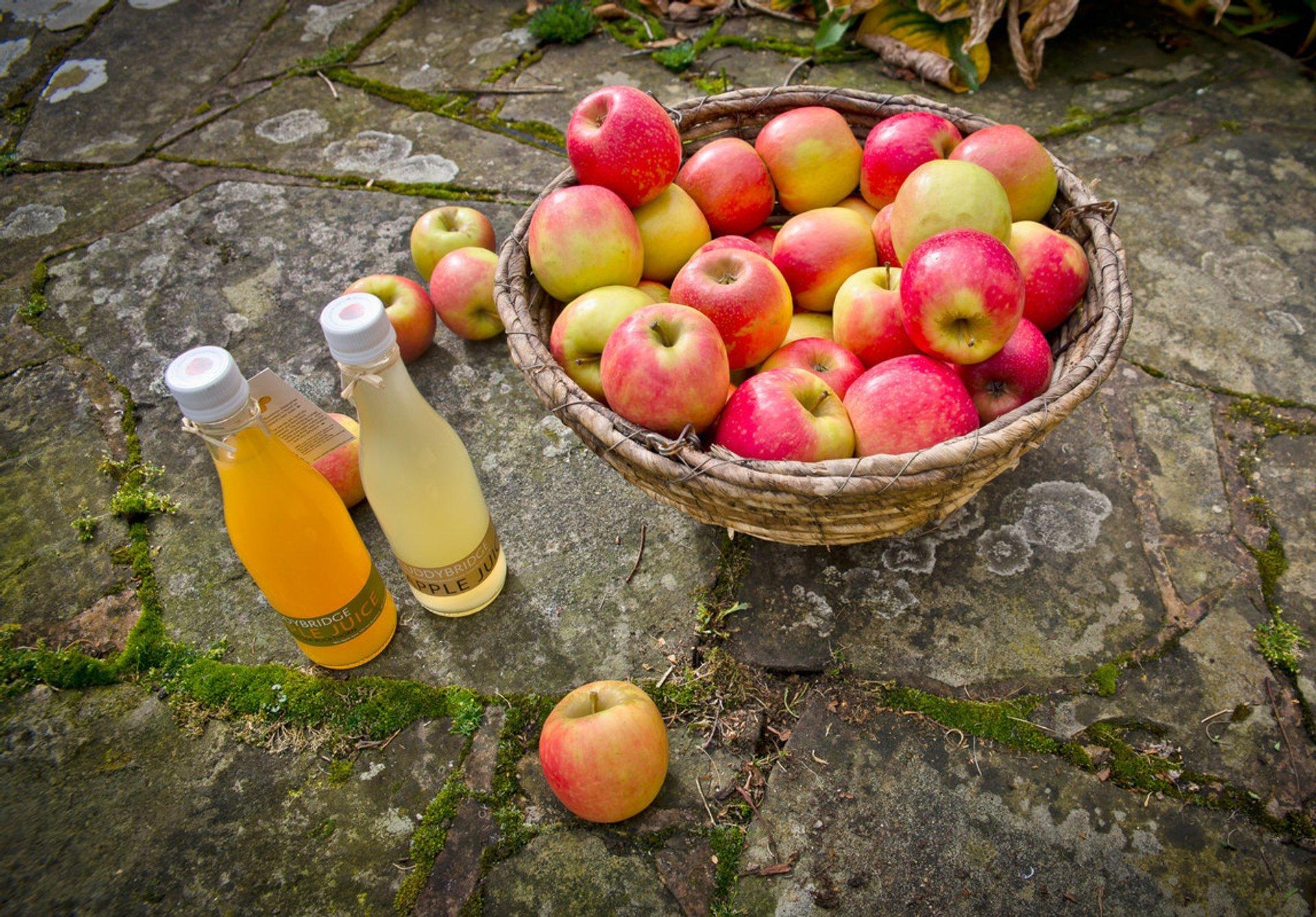 Natural freshly squeezed apple juice. Cuddybridge Applejuice, handpreseed in the Scottish Borders 2019