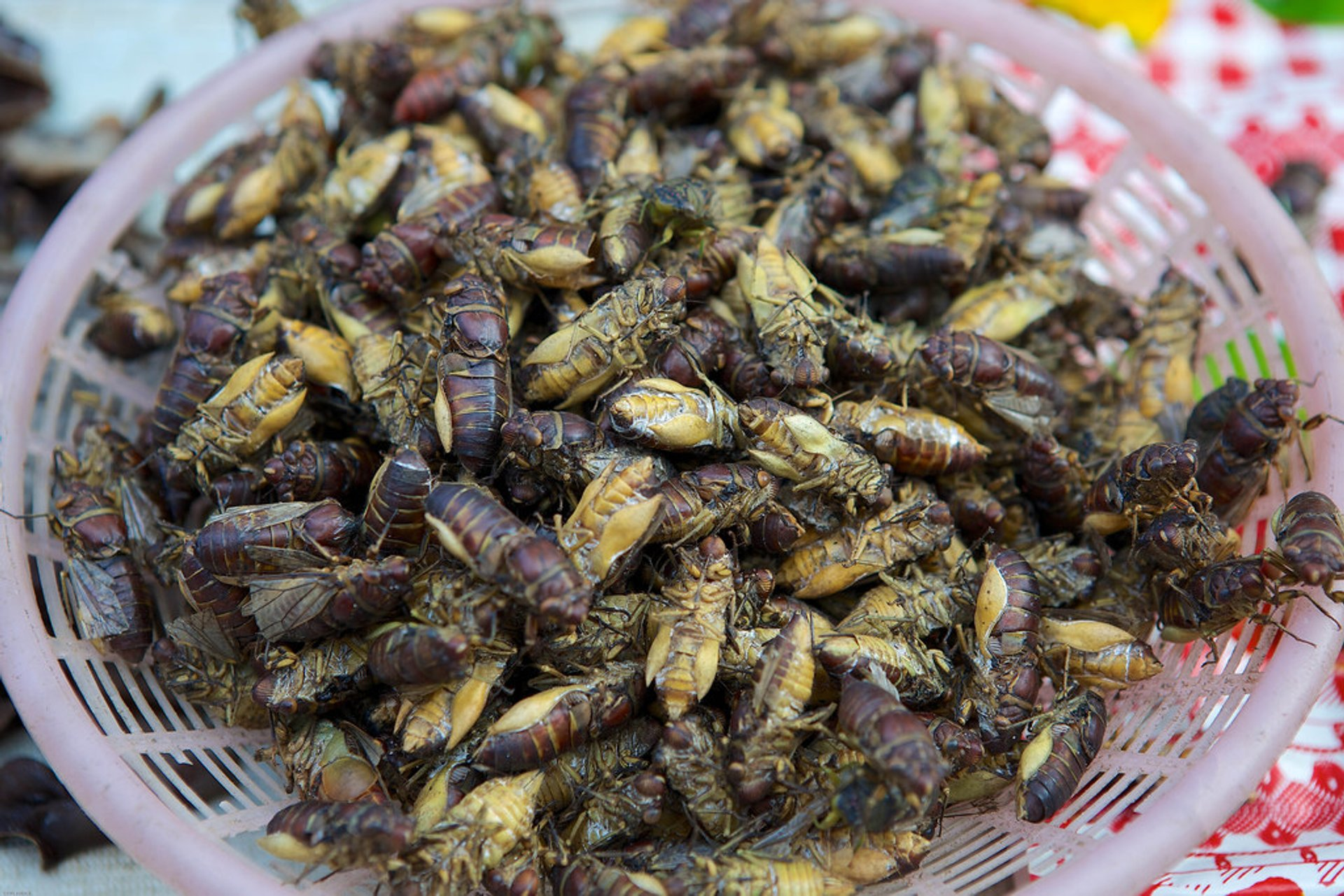 Edible Insects in Laos - Best Season 2020