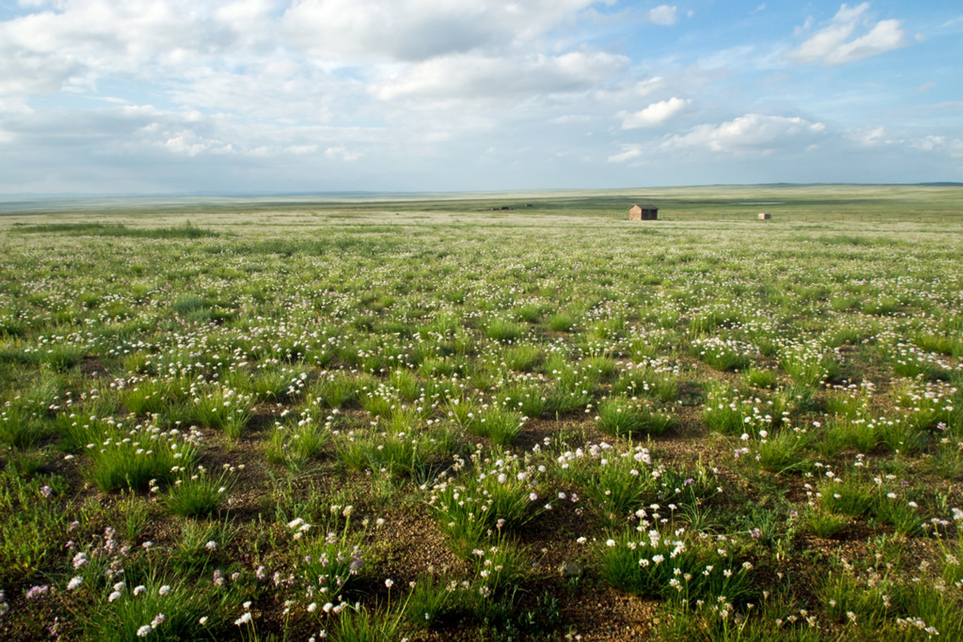 Wildflowers of Steppes in Mongolia 2020 - Best Time