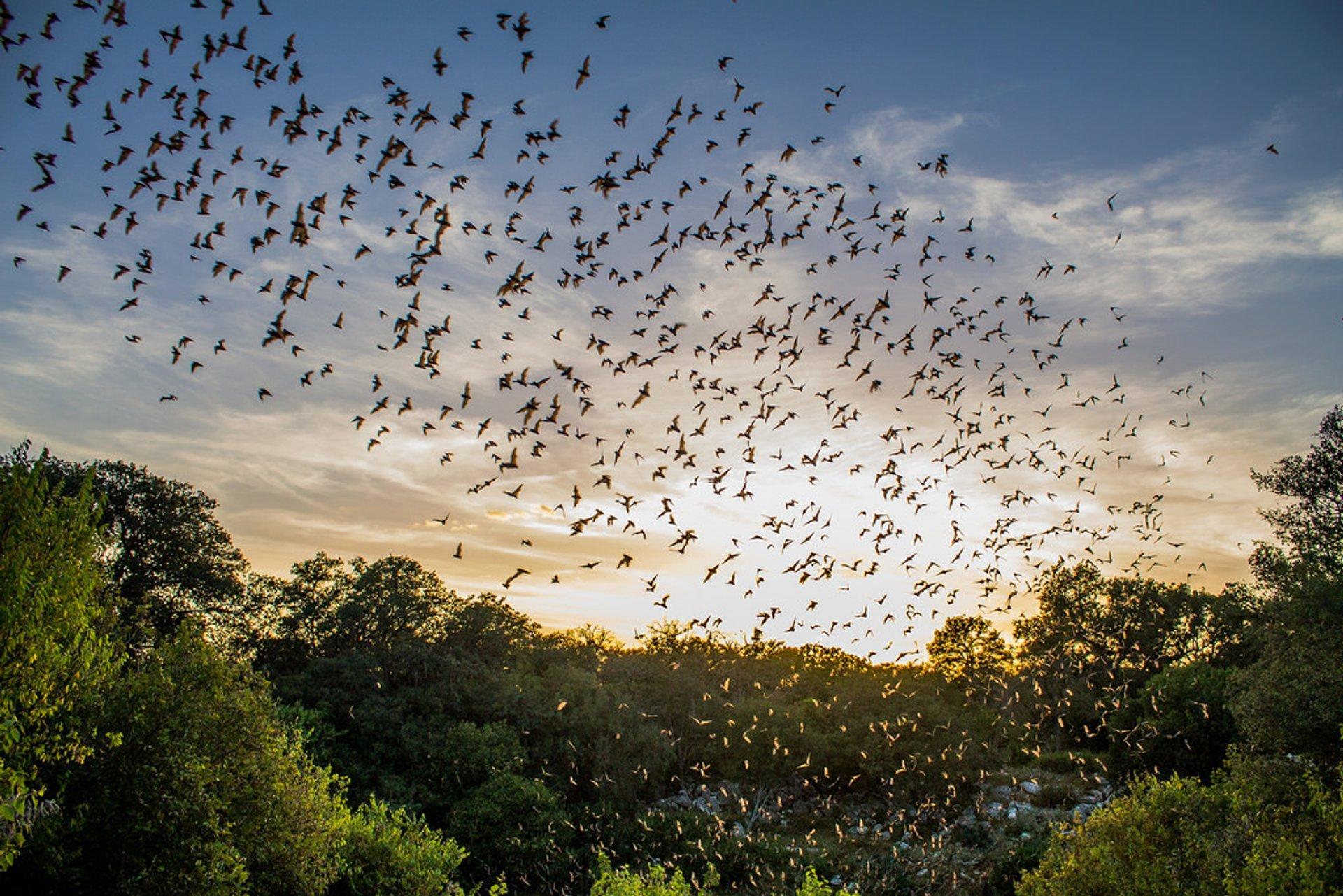 Bracken Bat Cave 2020