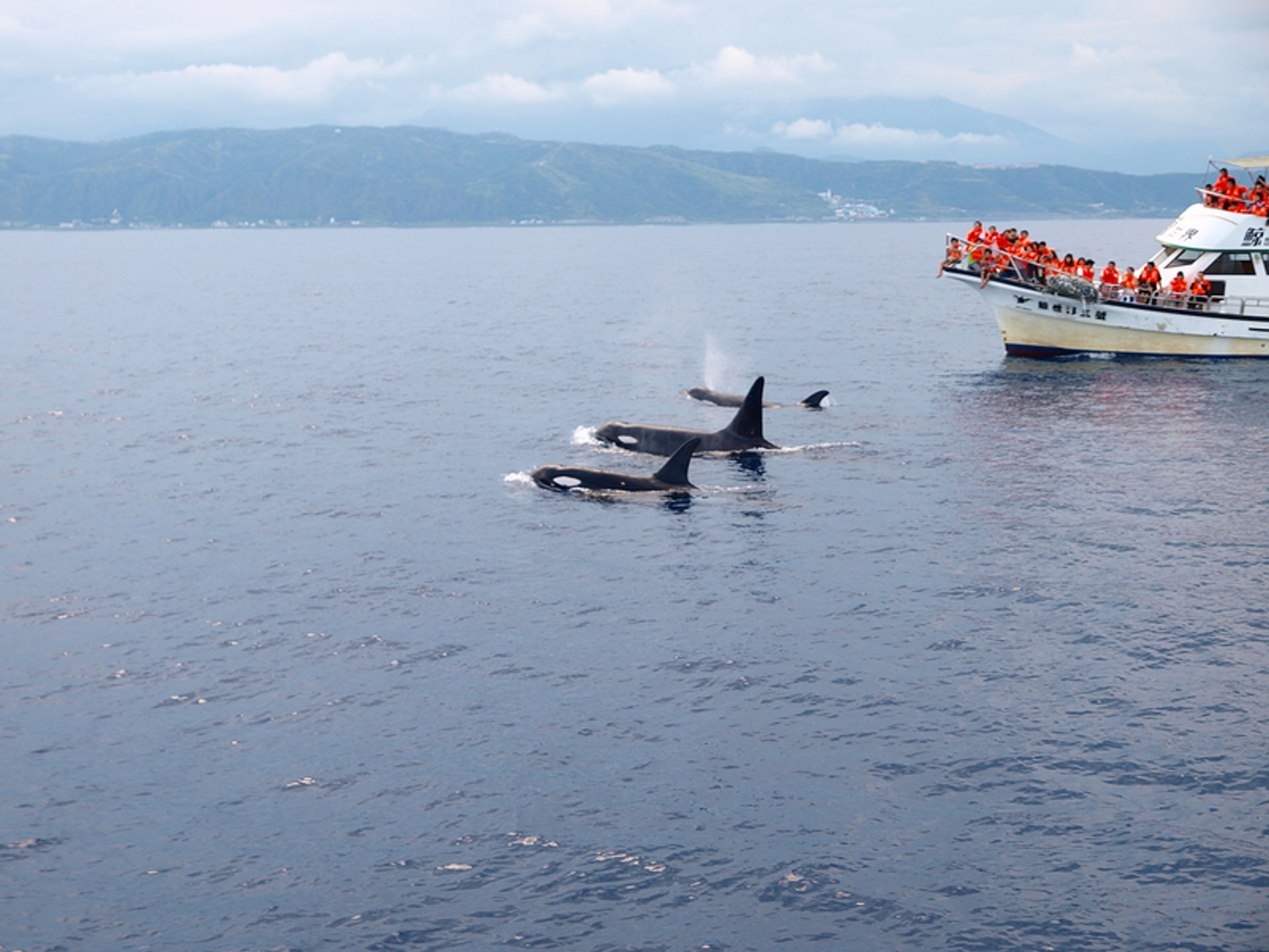 Dolphin and Whale Watching in Taiwan 2020 - Best Time