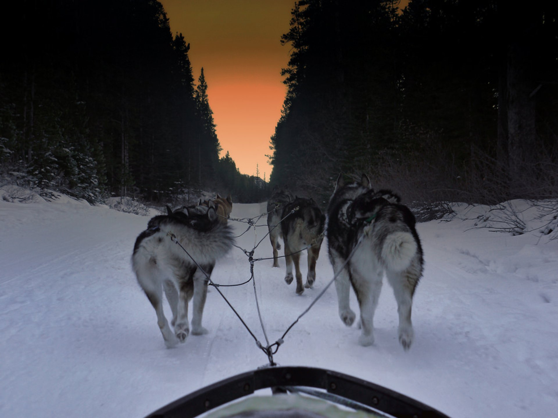 Dog Sledding in Banff & Jasper National Parks - Best Season 2019