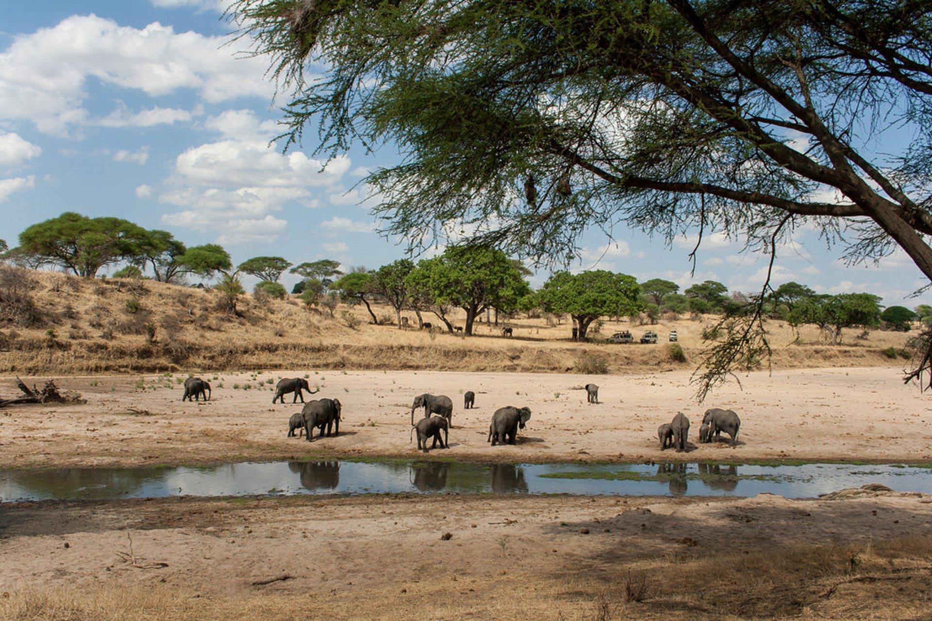Tarangire National Park, Tanzania 2020