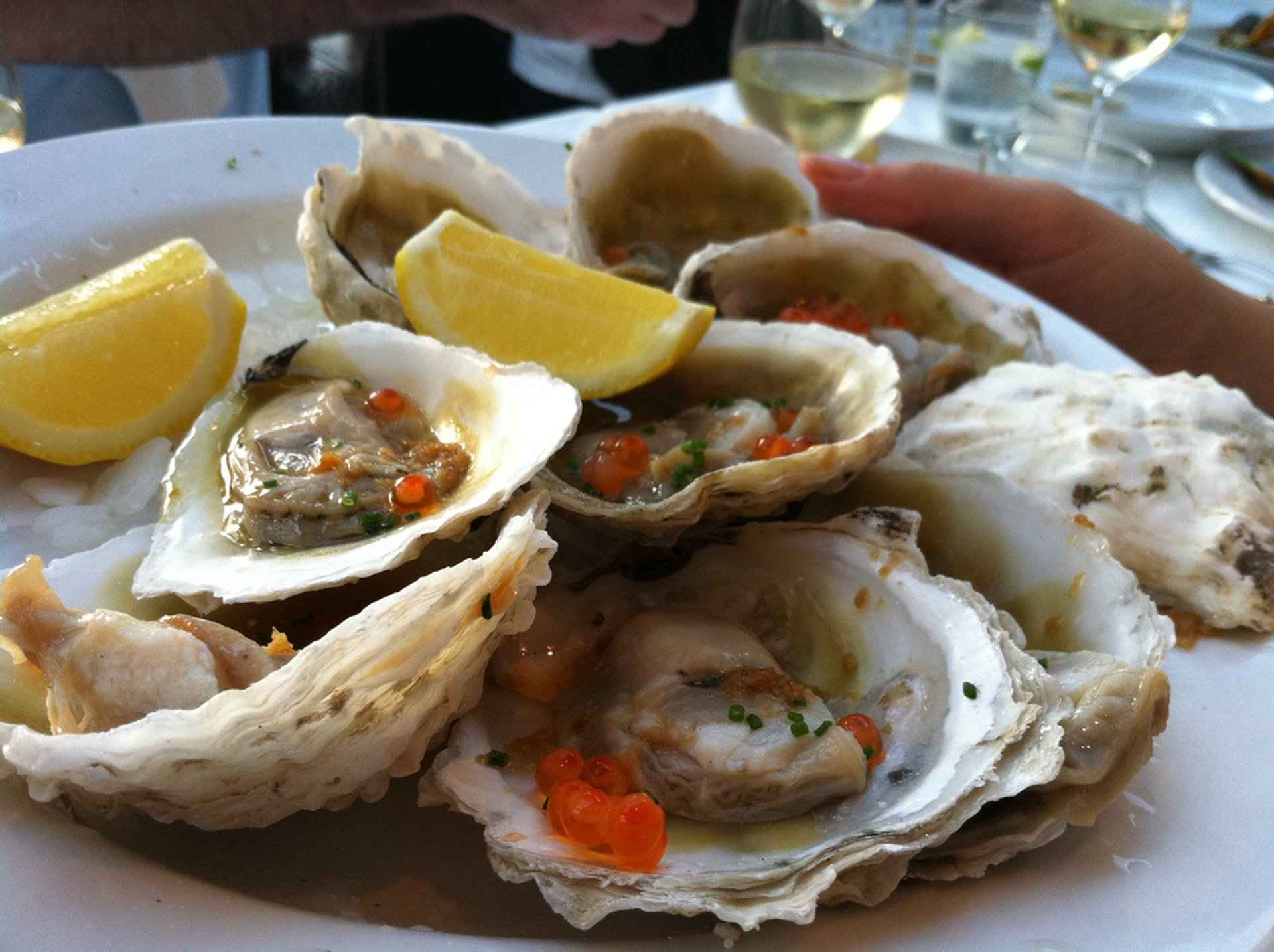 Bluff Oysters in New Zealand - Best Time