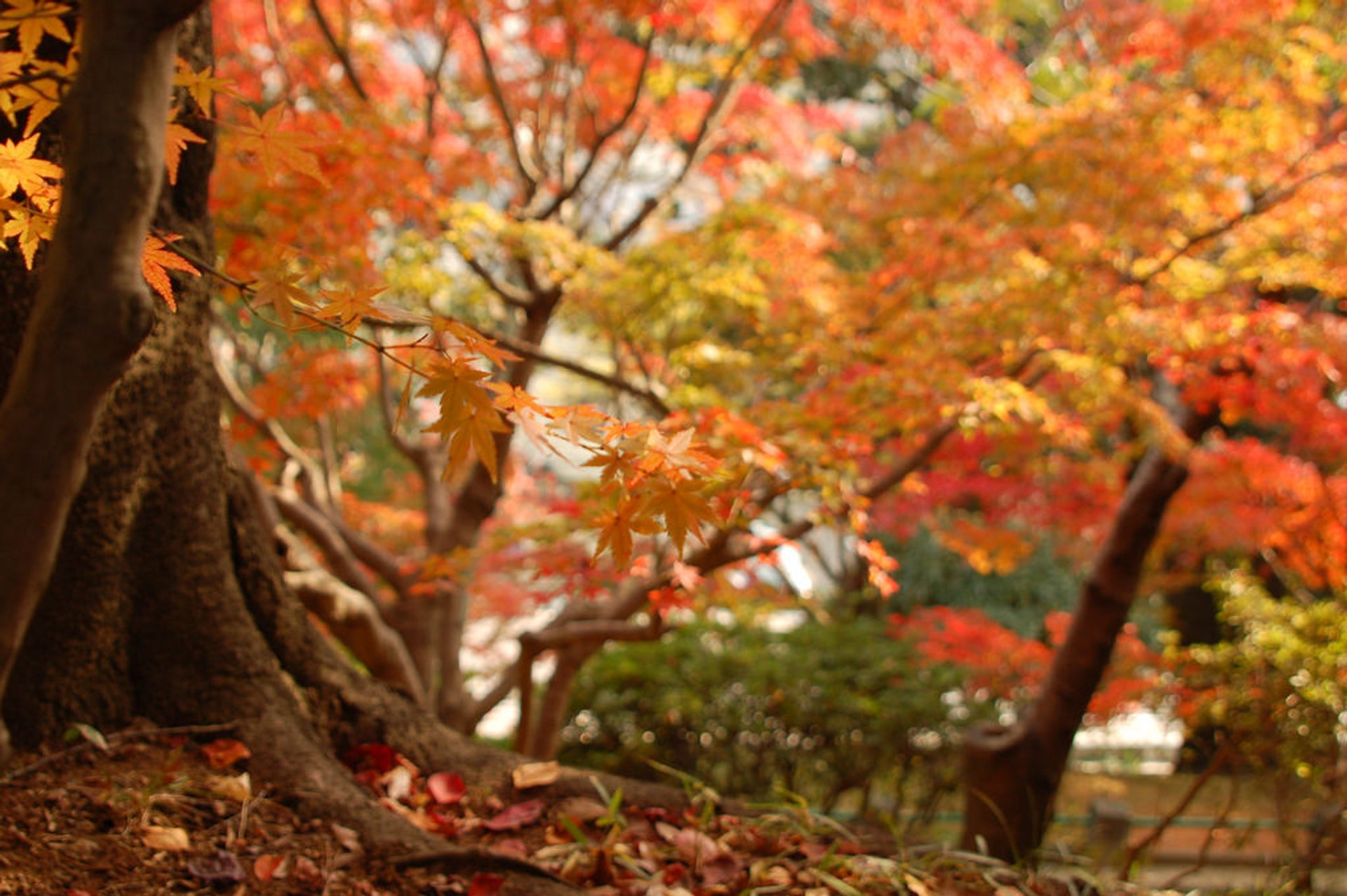 Best time for Autumn in Japan 2020