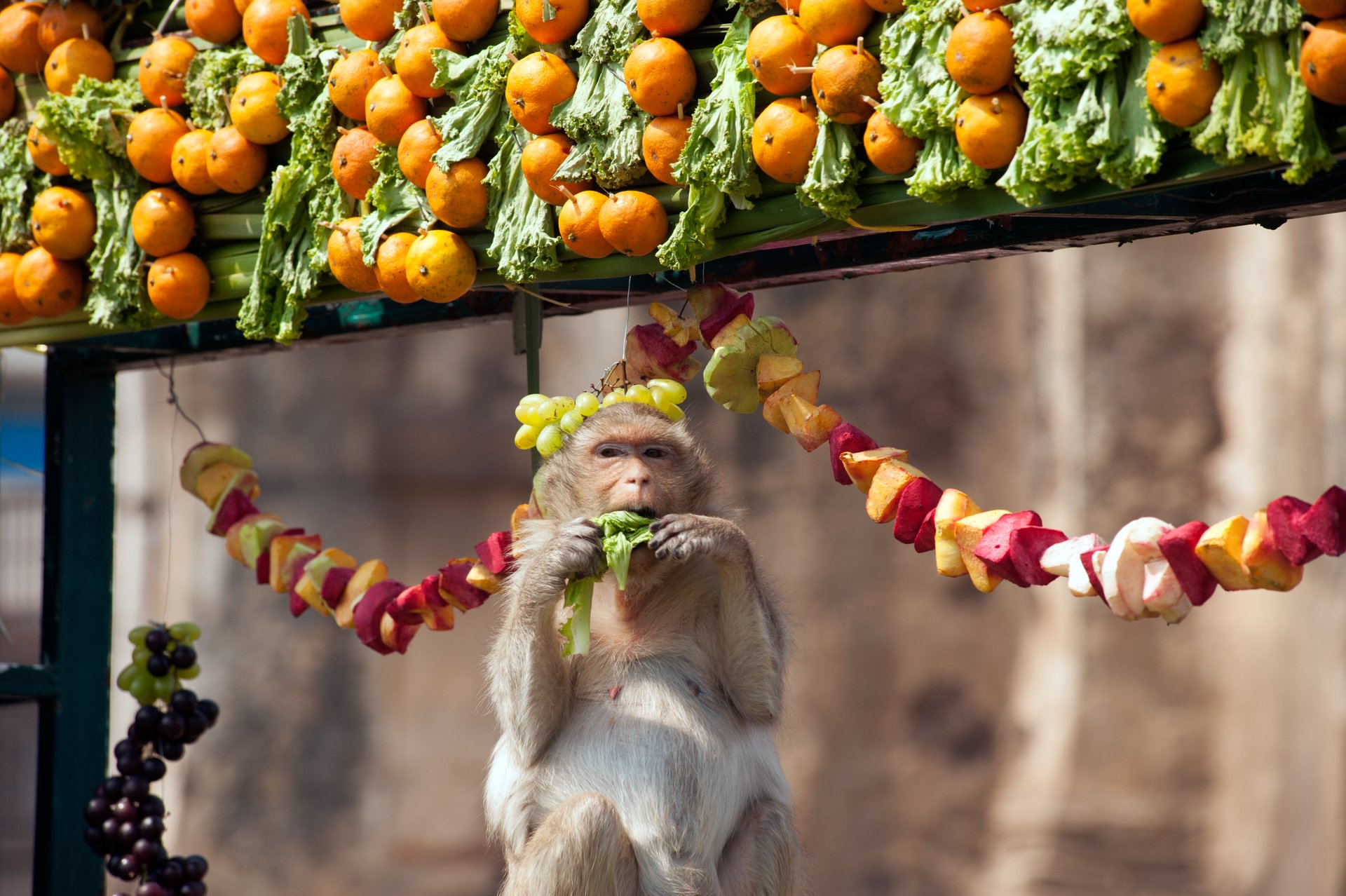 Lopburi Monkey Banquet Festival in Thailand 2019 - Best Time