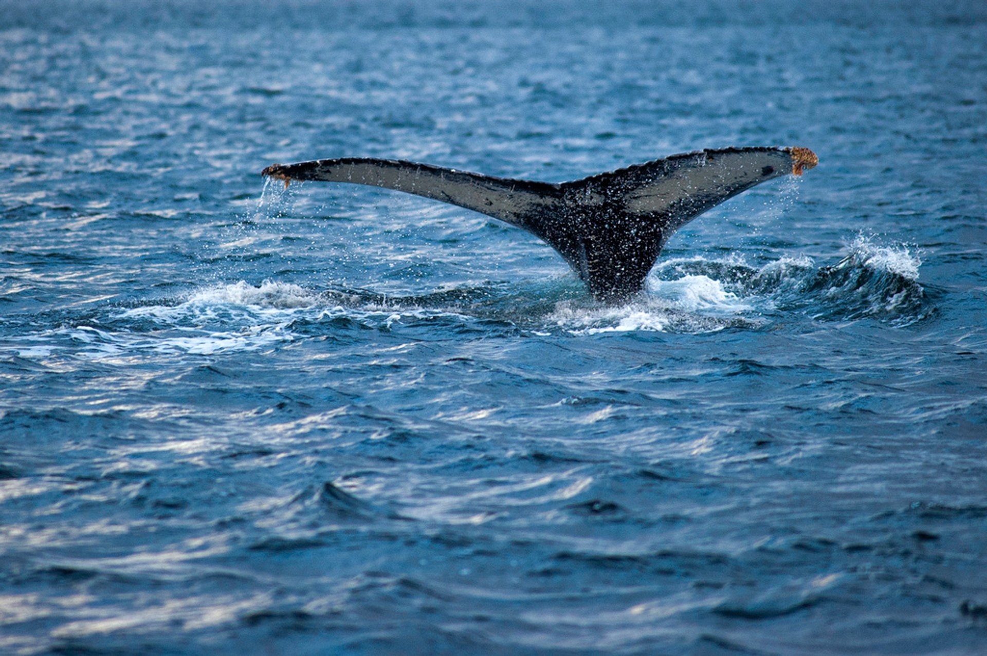 Whale Watching in Chile - Best Time