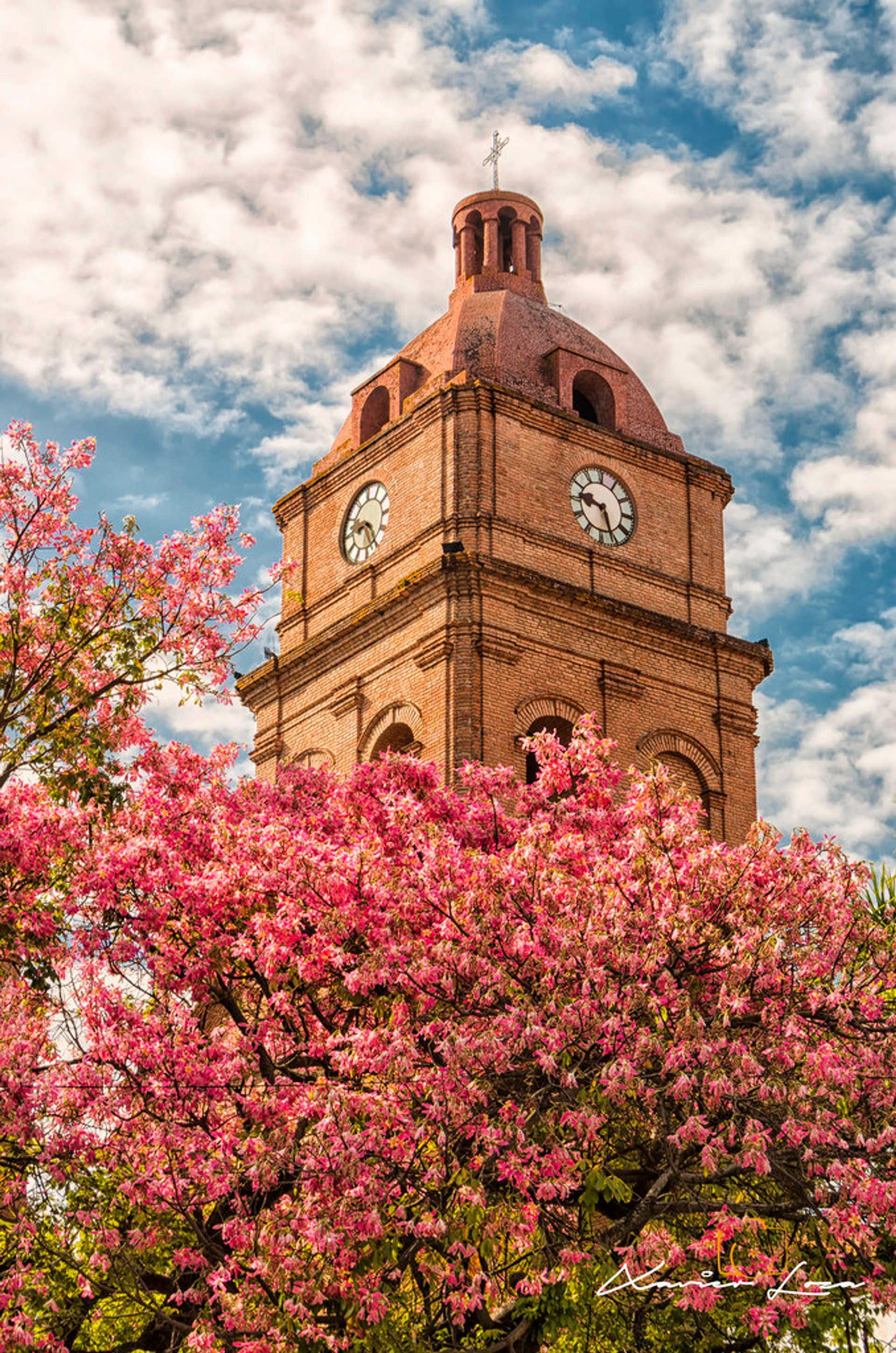 Best time for Toborochi Tree in Bloom in Bolivia 2020