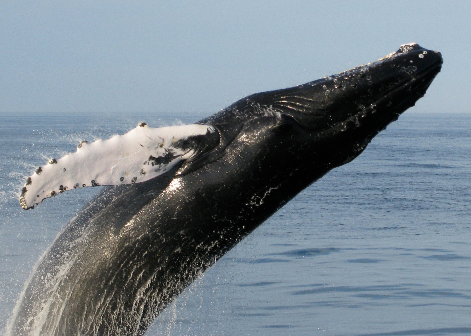 Whale Watching in Maine 2020 - Best Time