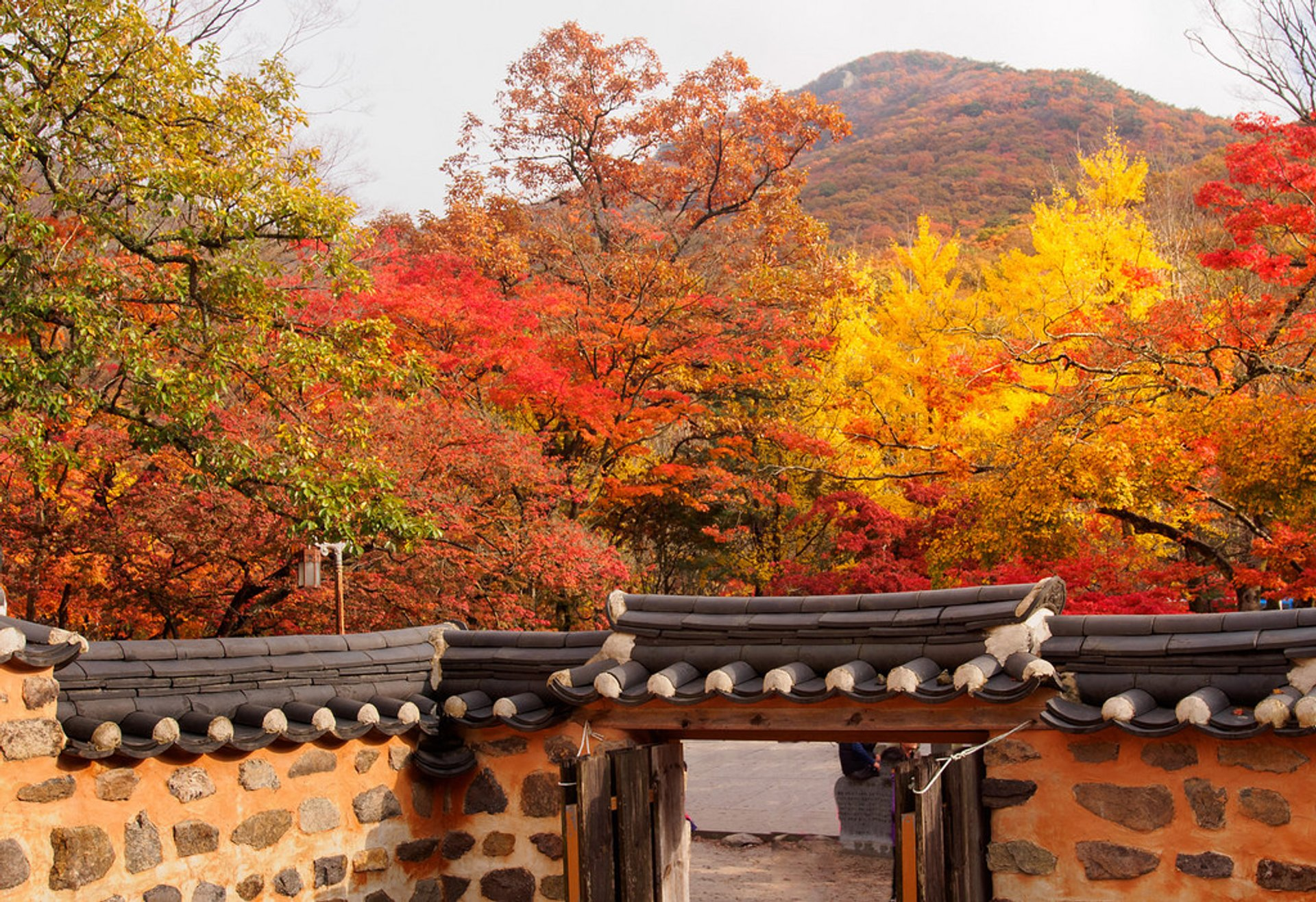 Autumn in South Korea 2020 - Best Time