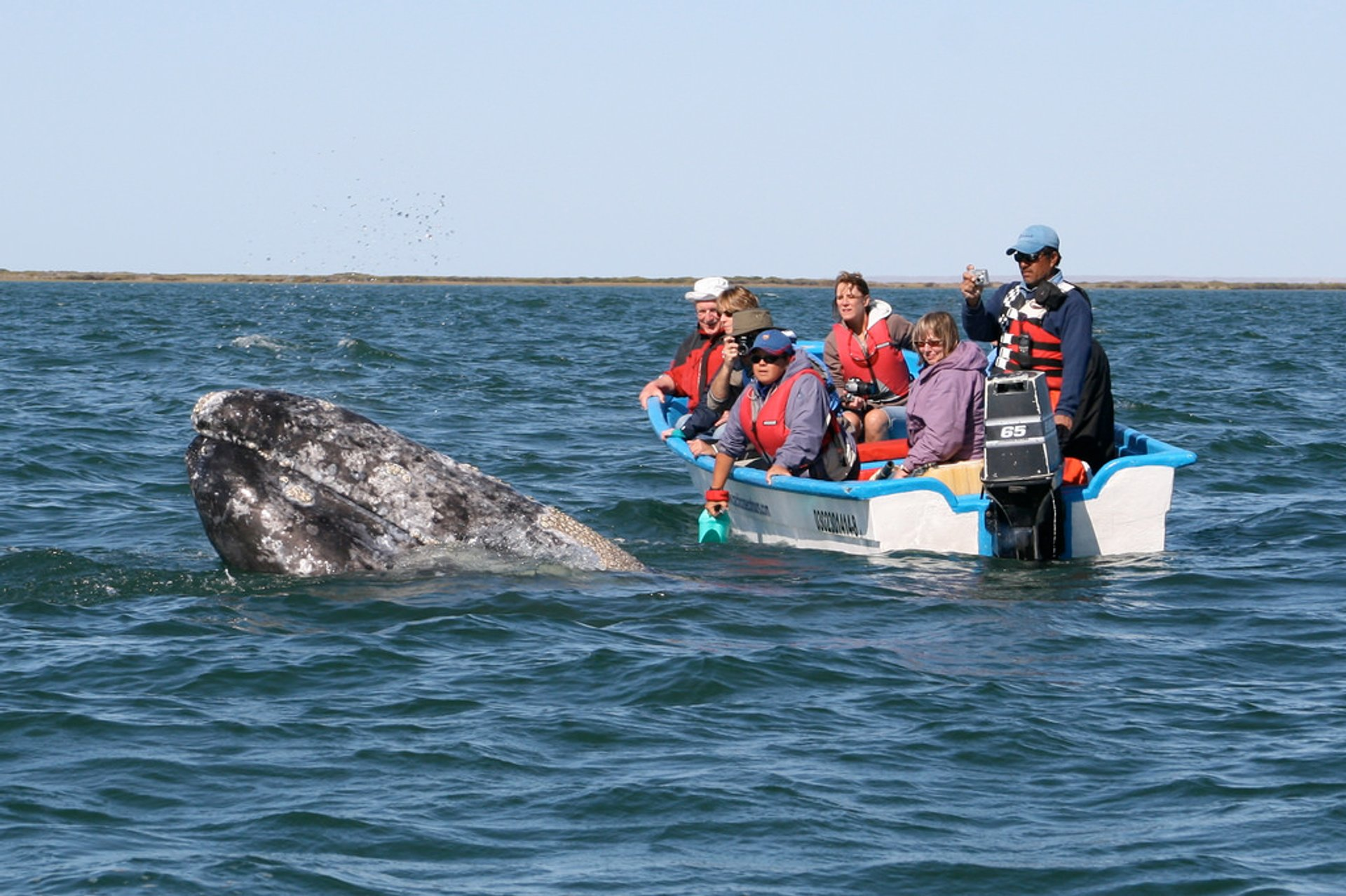 Best time for Whale Watching in Mexico 2020