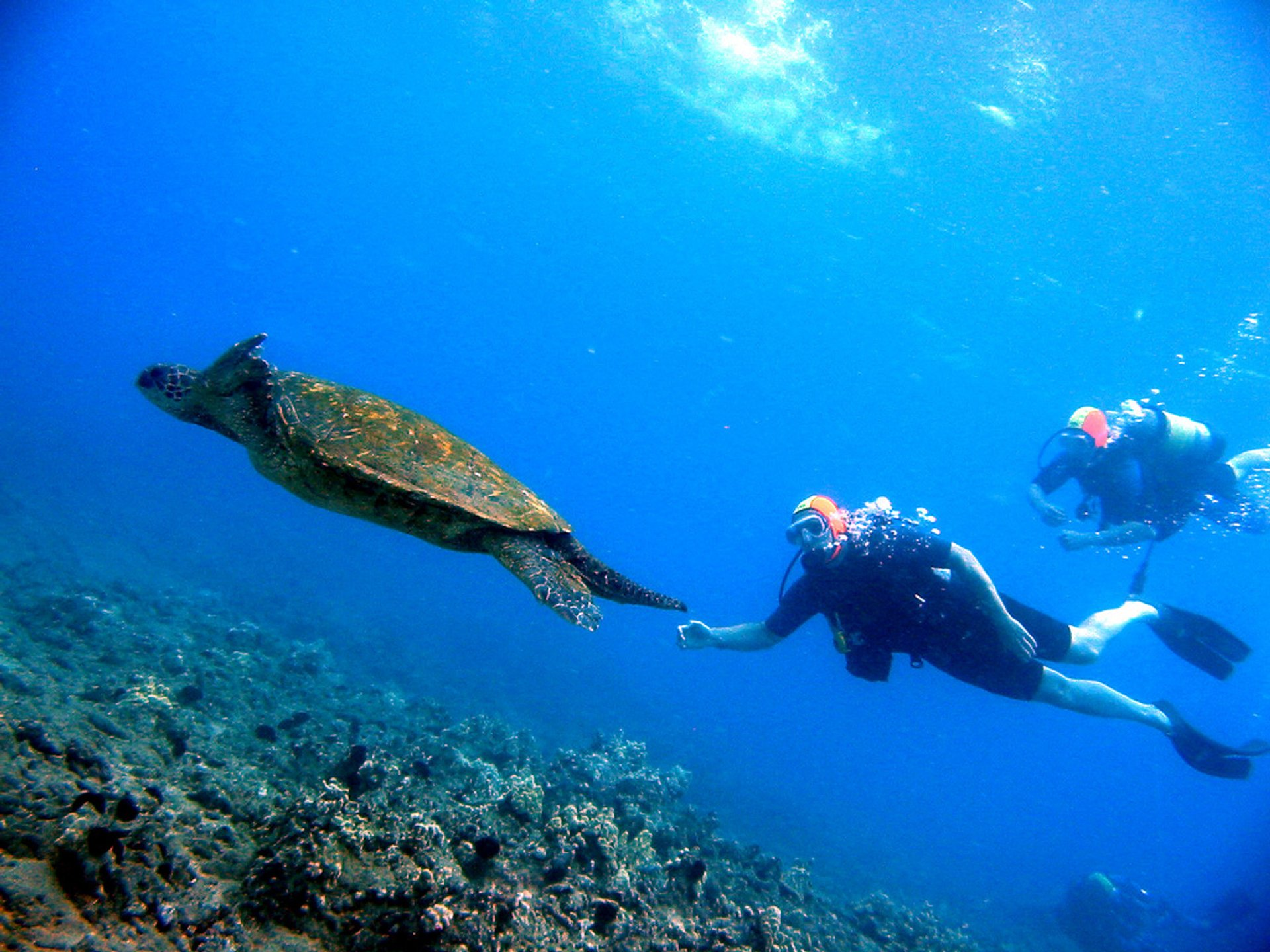 Scuba Diving in Hawaii 2020 - Best Time