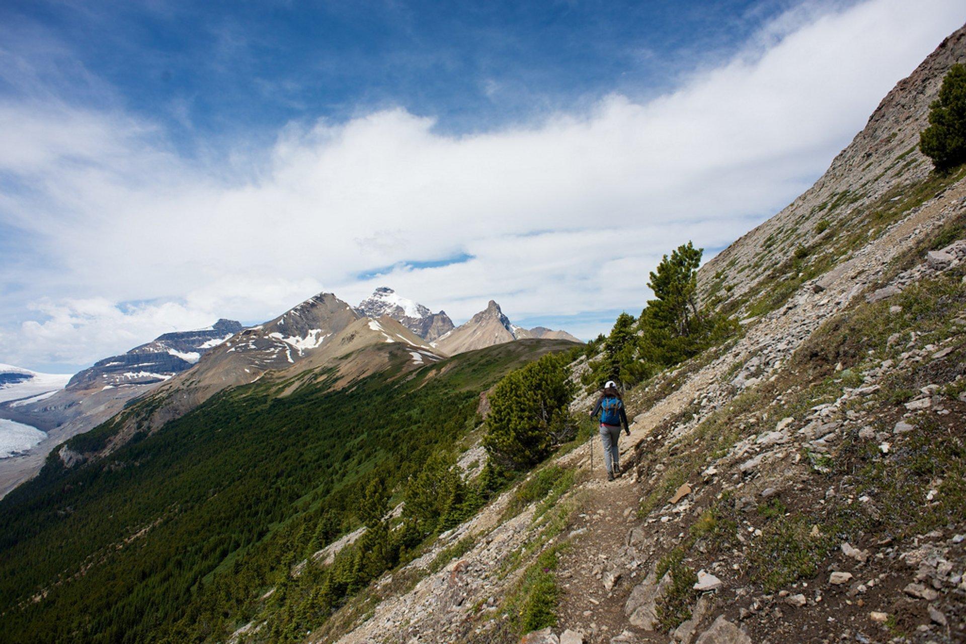 Parker Ridge Trail in Banff & Jasper National Parks 2020 - Best Time