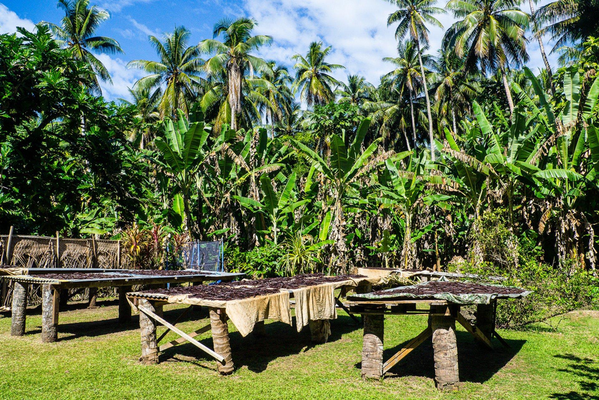 Taha'a, Vanilla Island 2020