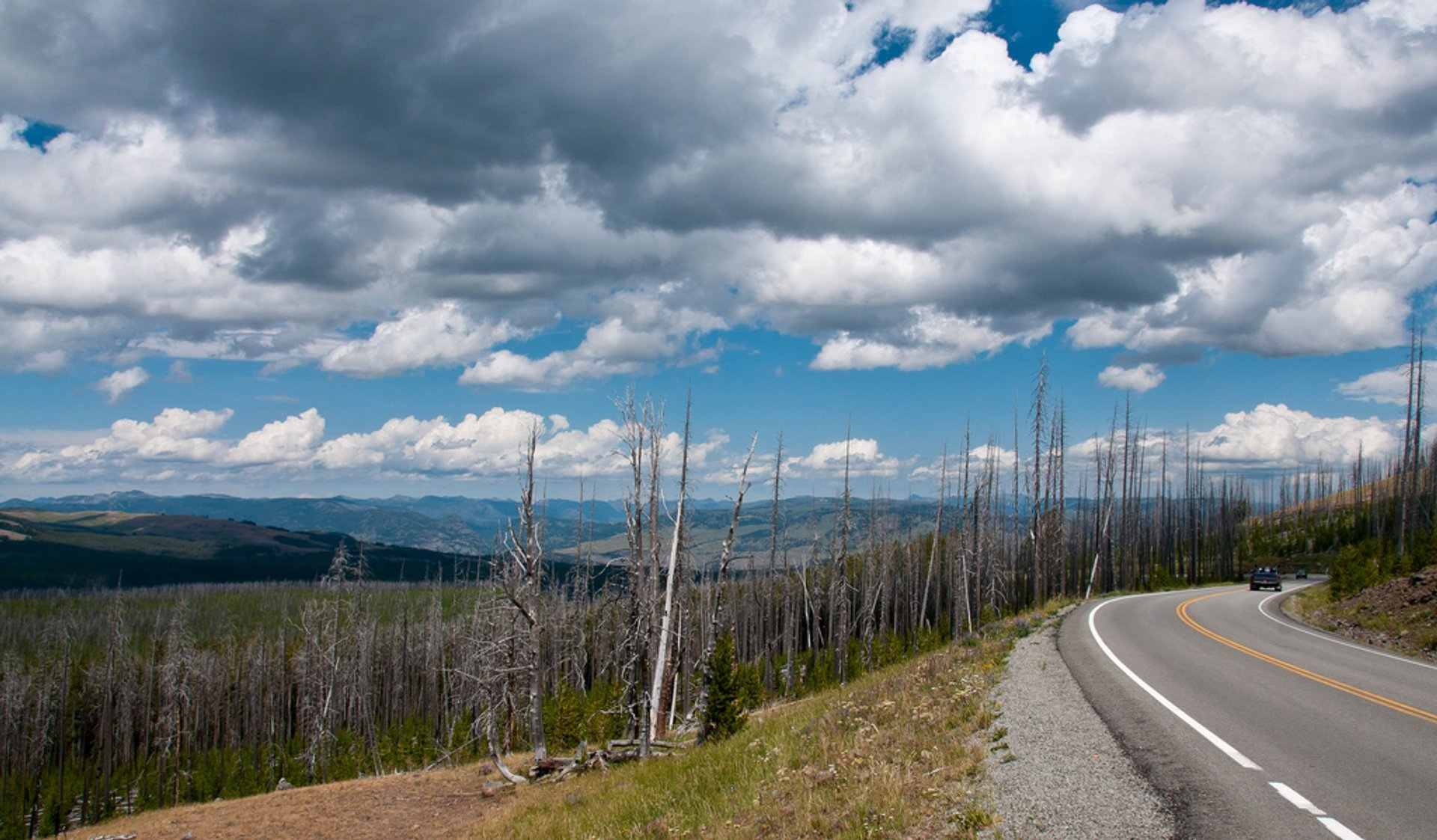 Dunraven Pass in Yellowstone National Park 2020 - Best Time
