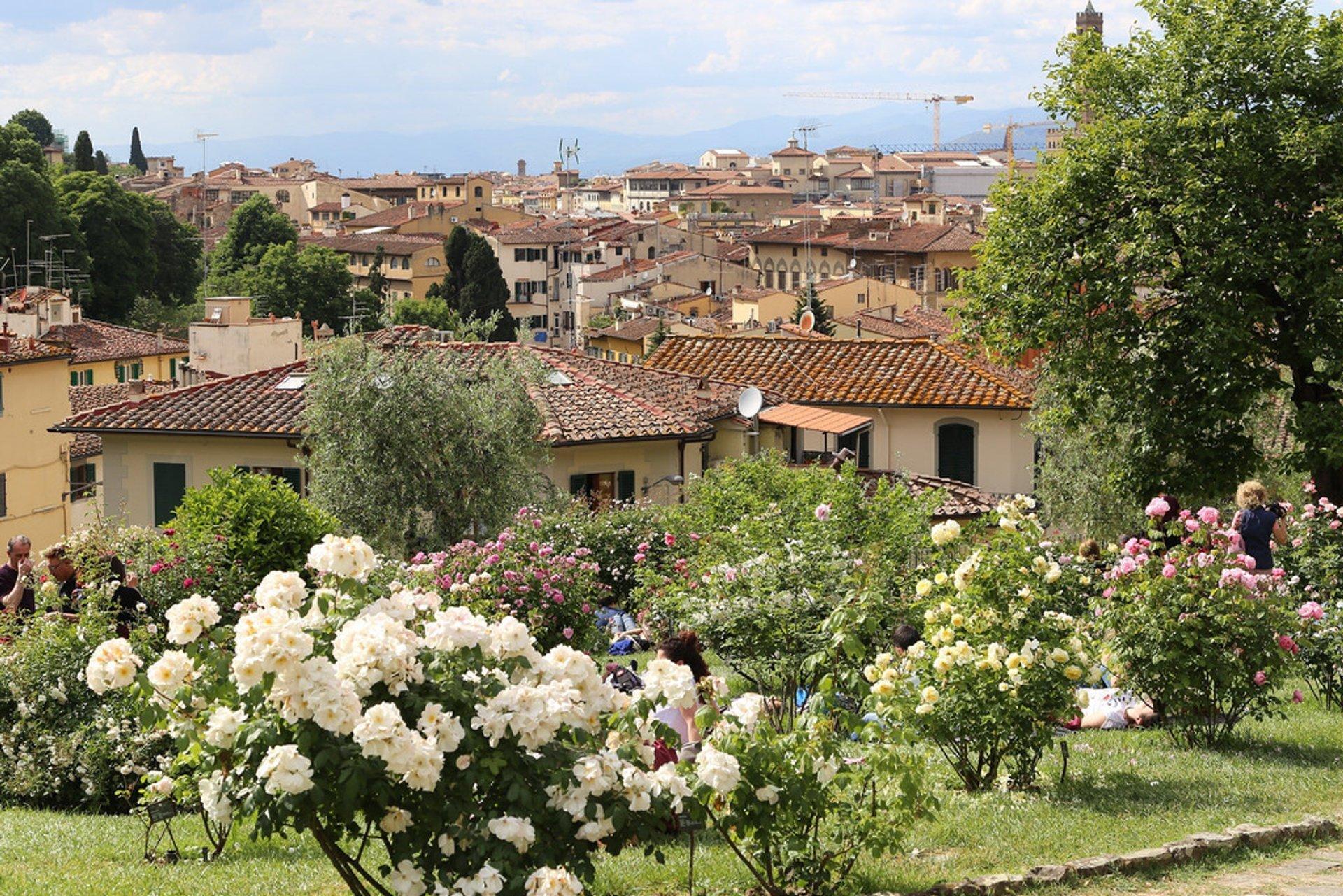 The Rose Garden (Giardino delle rose), Florence, Tuscany 2020
