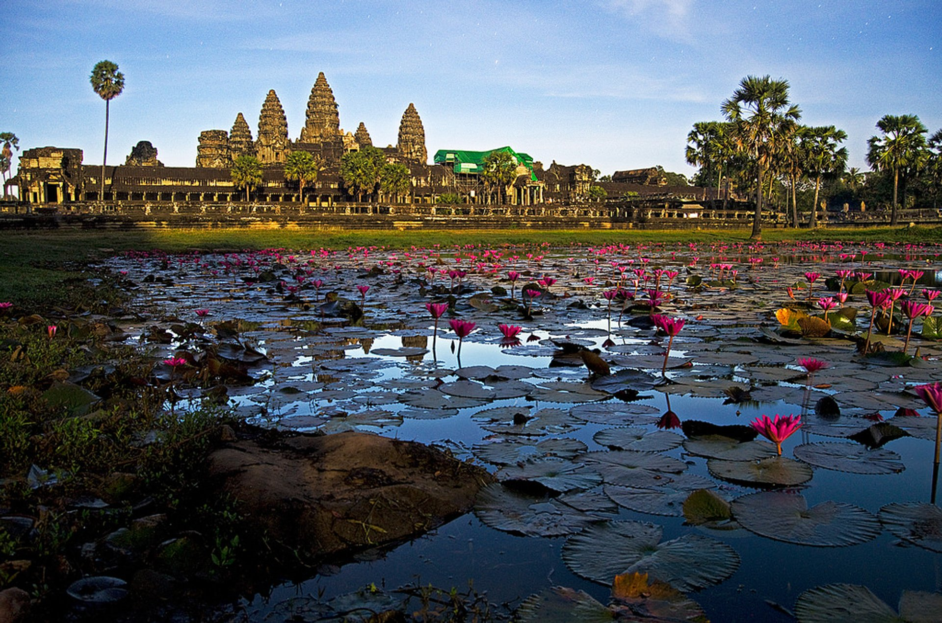 Lotus Blooming in Cambodia - Best Time