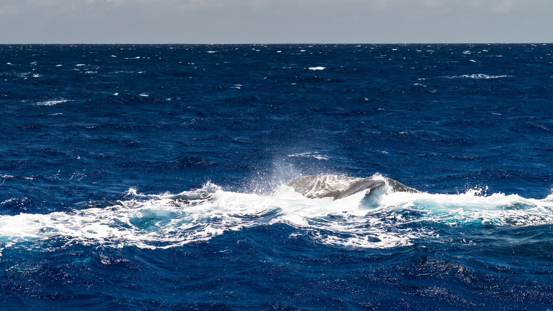 Whale Watching in Mauritius - Best Season