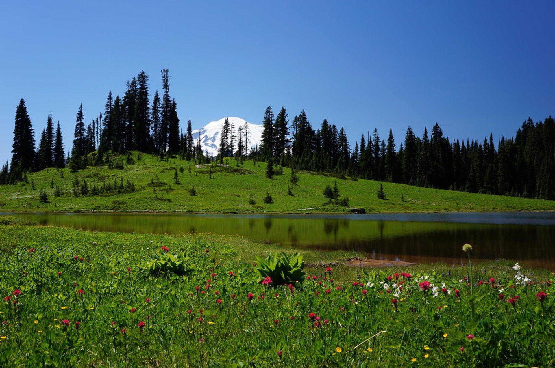 Alpine meadow at Tipsoo Lake 2020