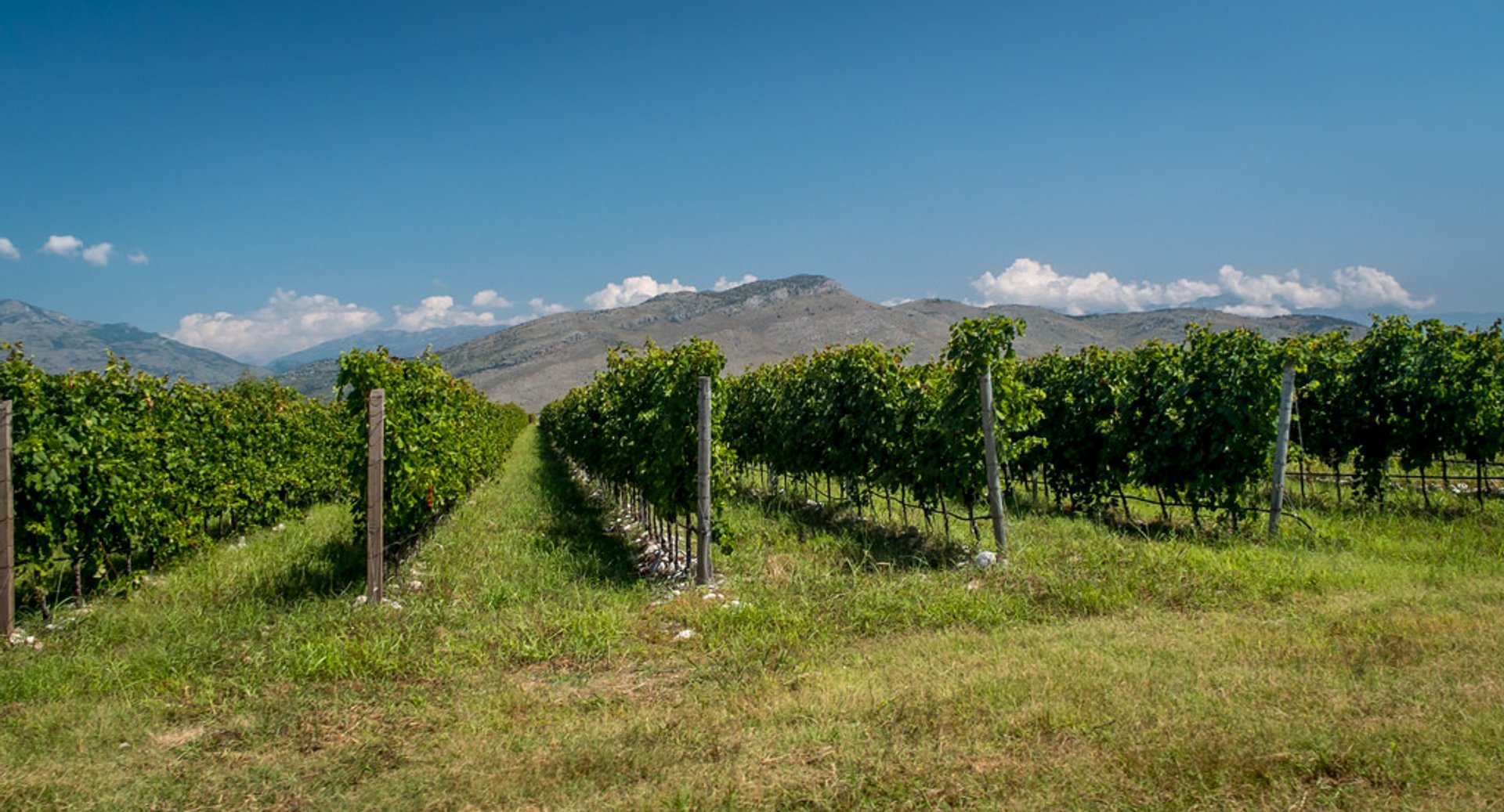 Wine Season in Montenegro 2020 - Best Time