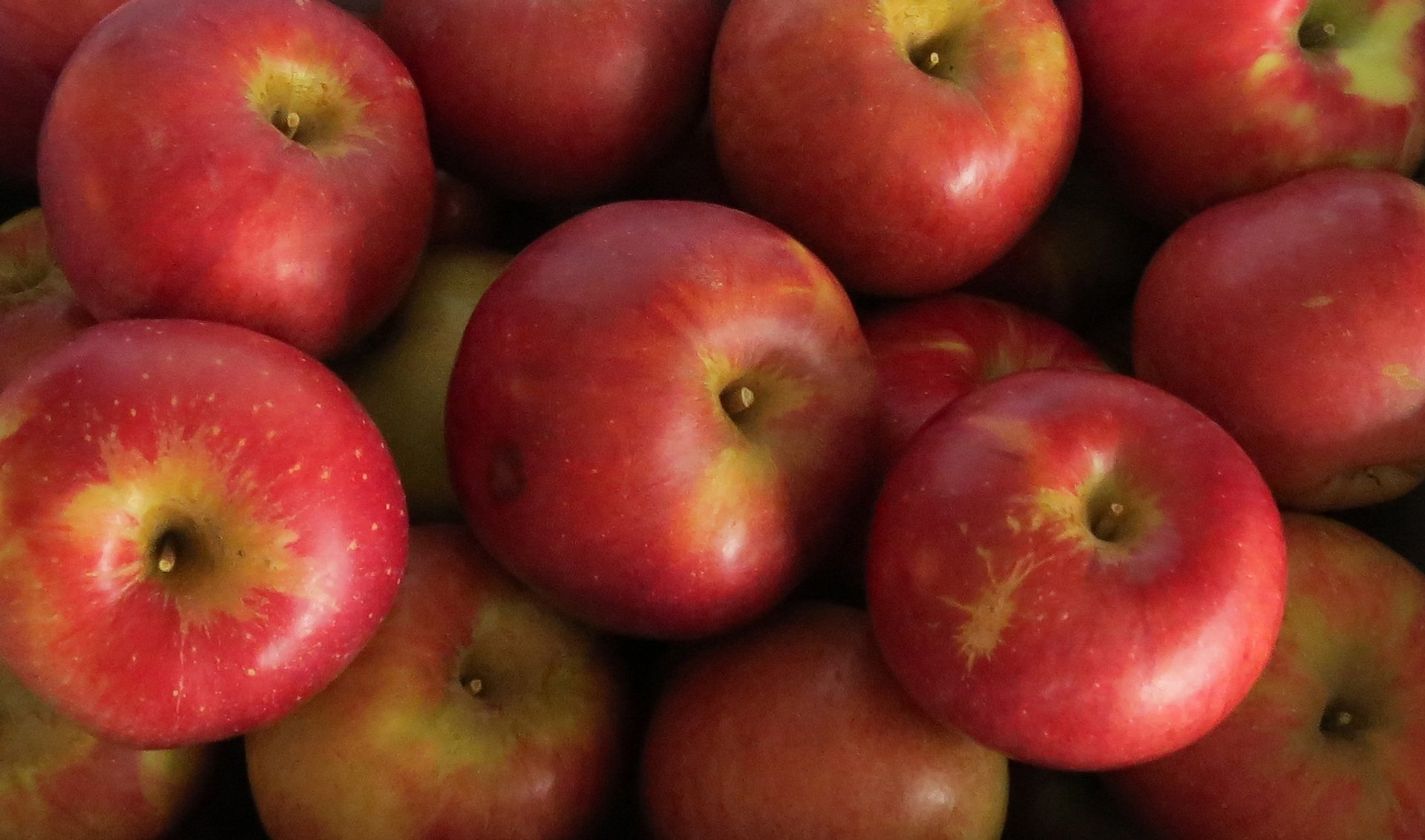 UBC Apple Festival in Vancouver - Best Season 2020