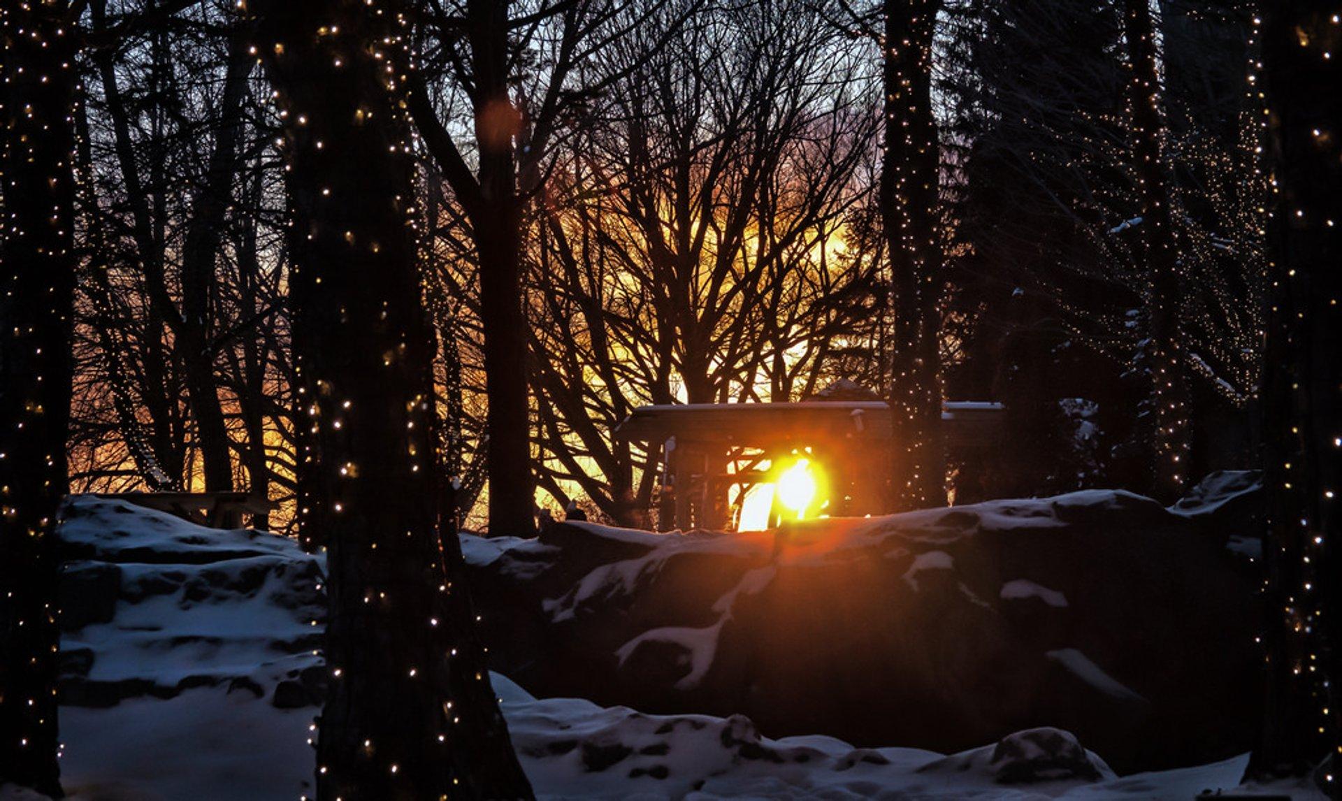 Winter Light Exhibition in Toronto - Best Season 2020
