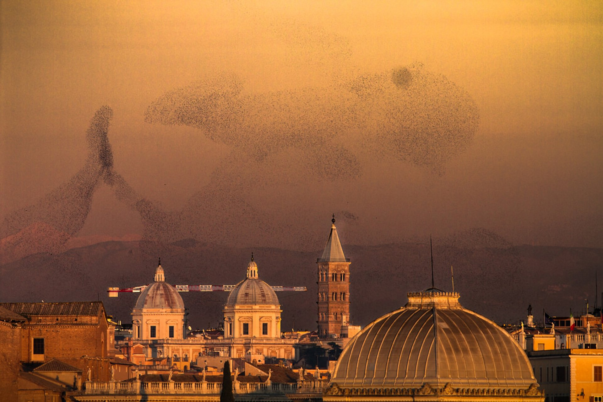 Starling Murmuration in Rome - Best Season 2019