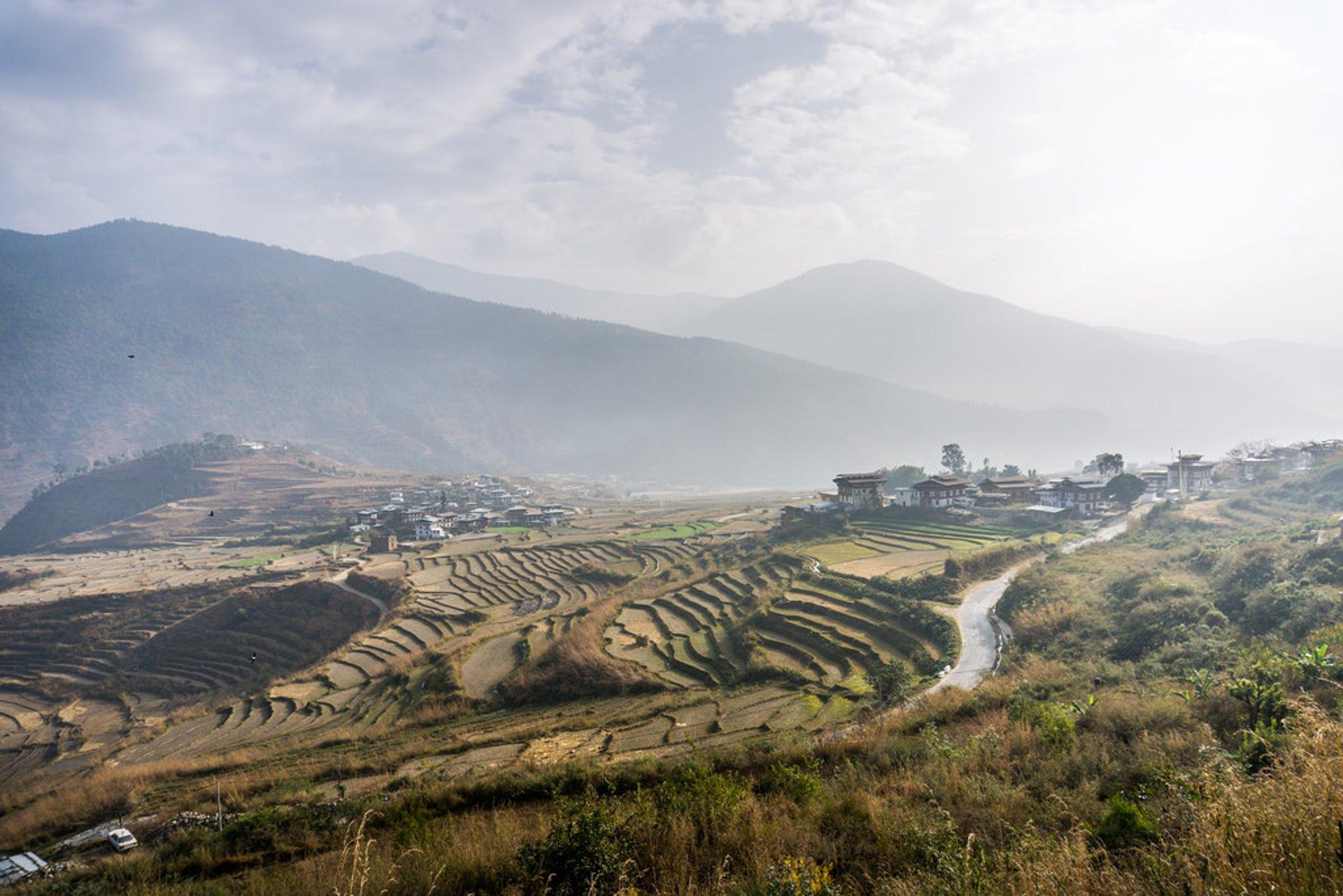 Rice Harvest in Bhutan - Best Time