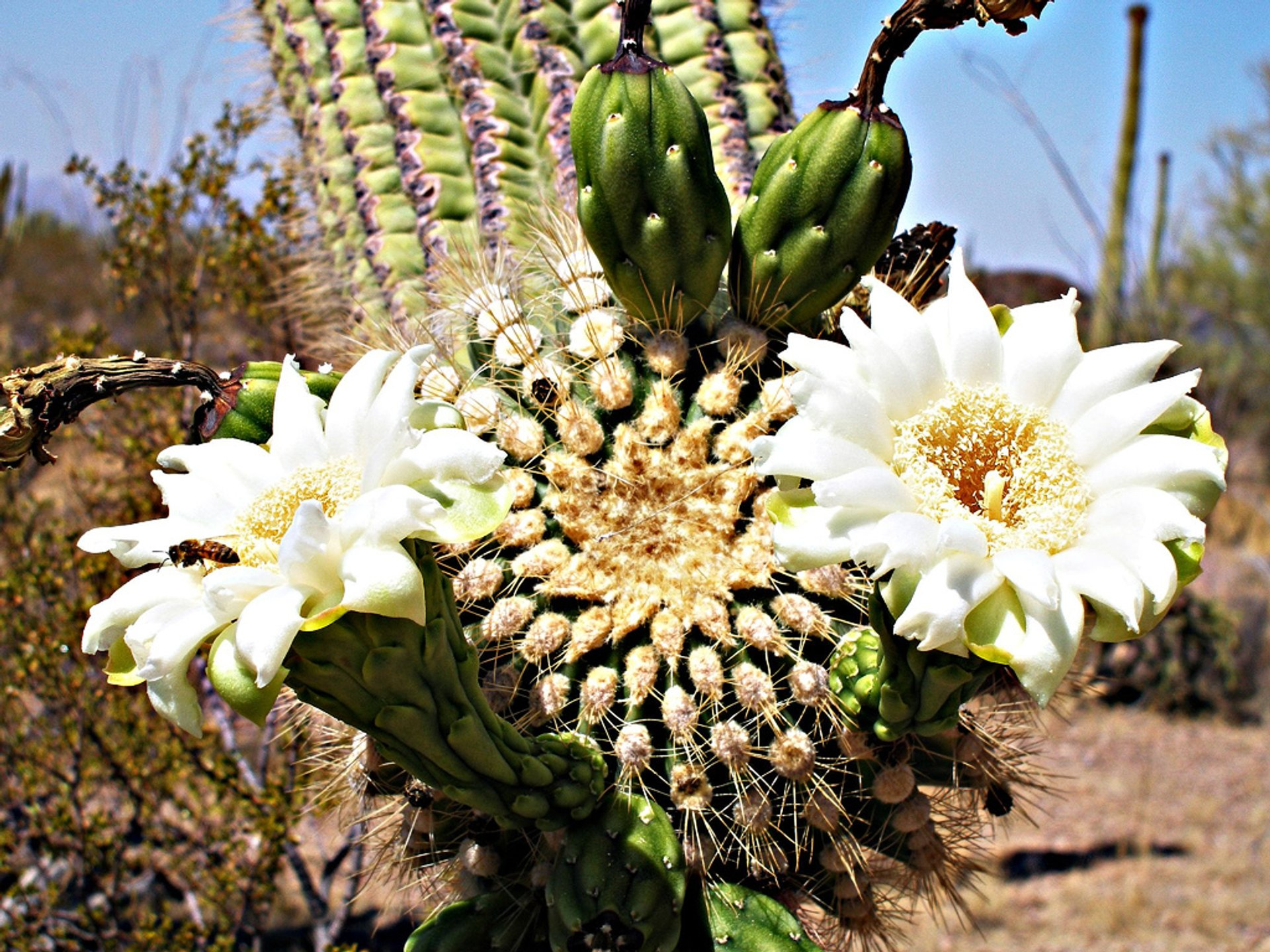 Cactus Bloom in Mexico 2019 - Best Time