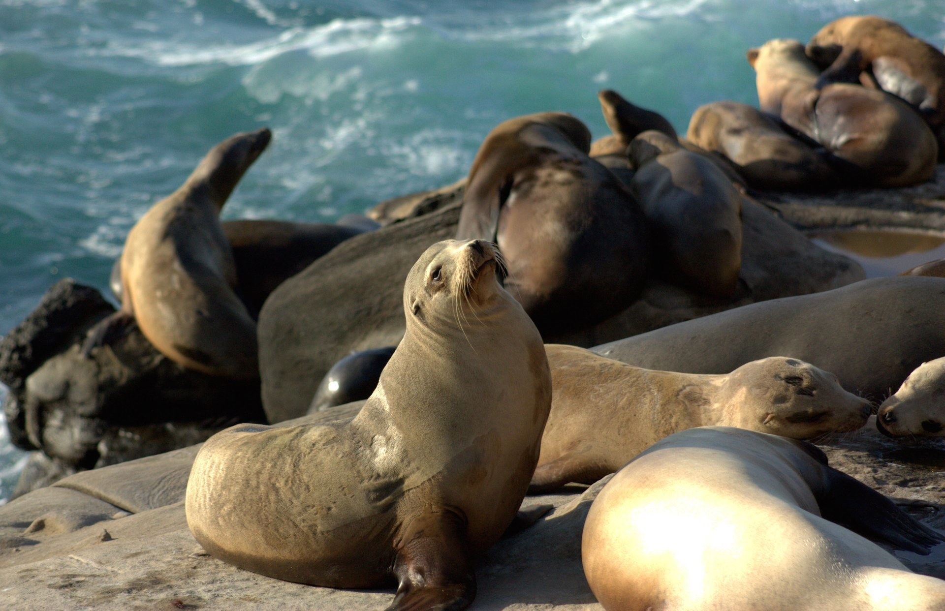 Seals and Sea Lions in San Diego 2019 - Best Time