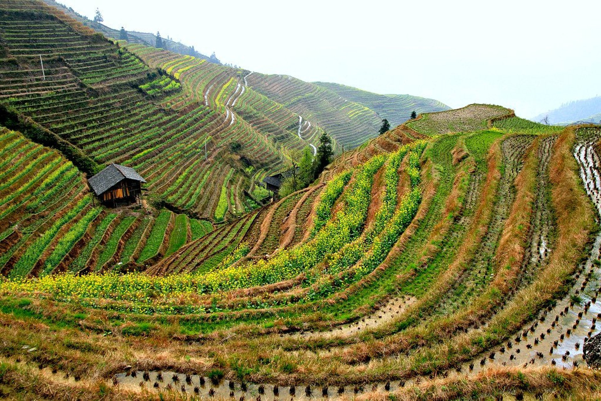 Best time to see Longsheng (Longji) Rice Terraces in China 2020
