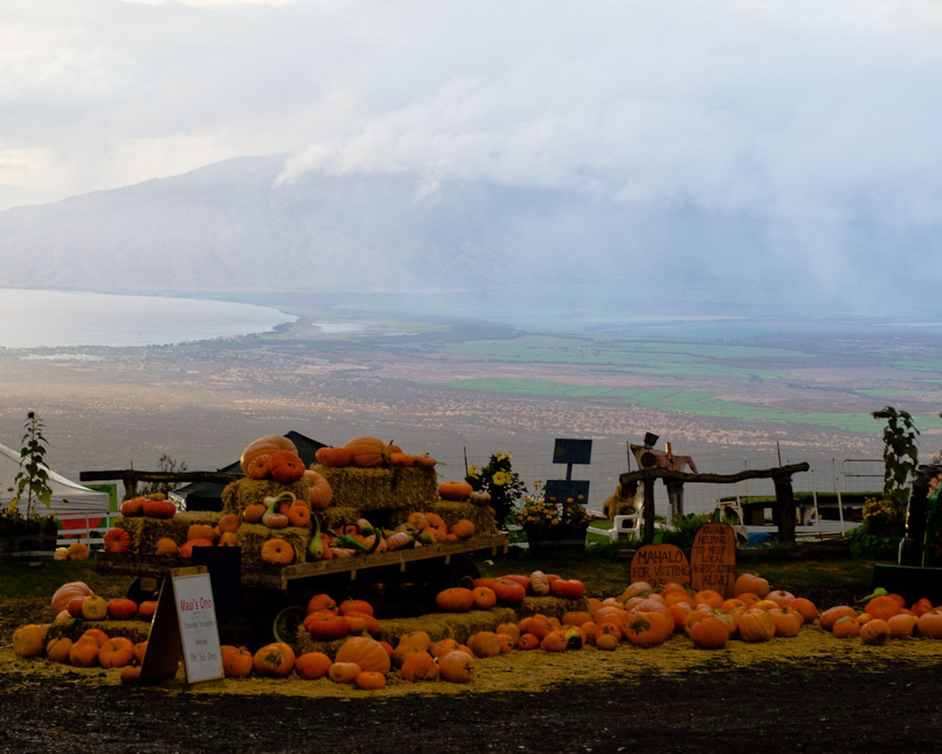 Pumpkin fun with Maui's valley in the background, Kula, Maui, Hawaii 2020