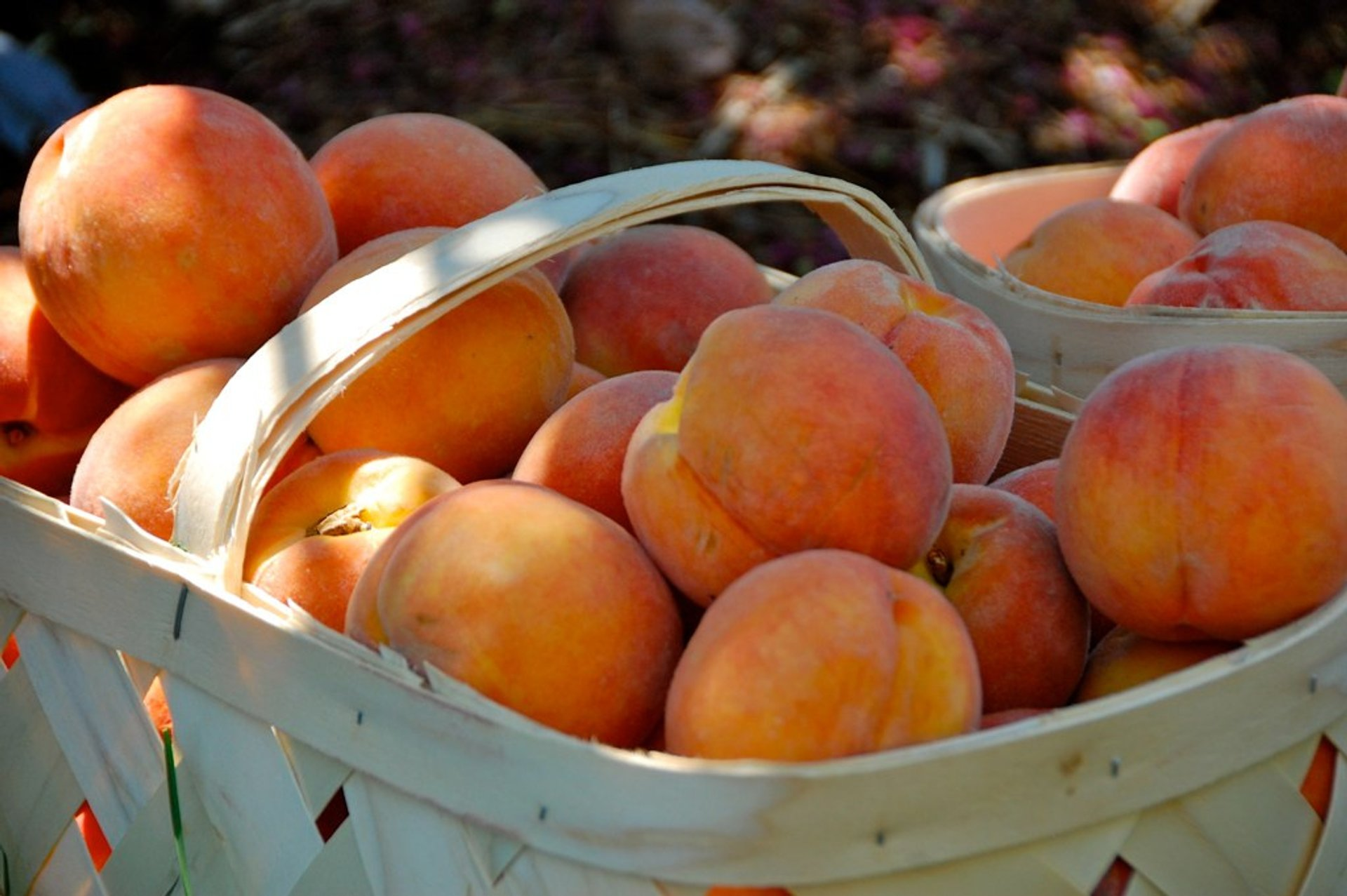 Apricots and Peaches in Georgia 2020 - Best Time