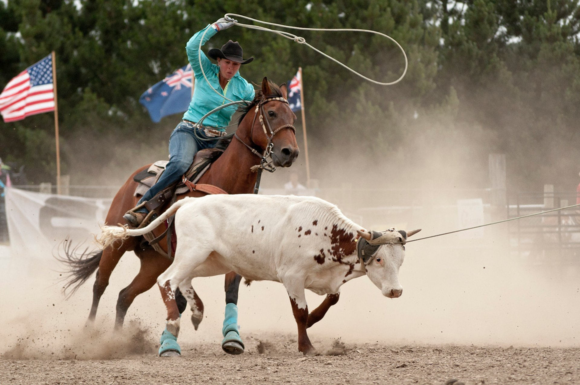 Rodeo in New Zealand 2020 - Best Time