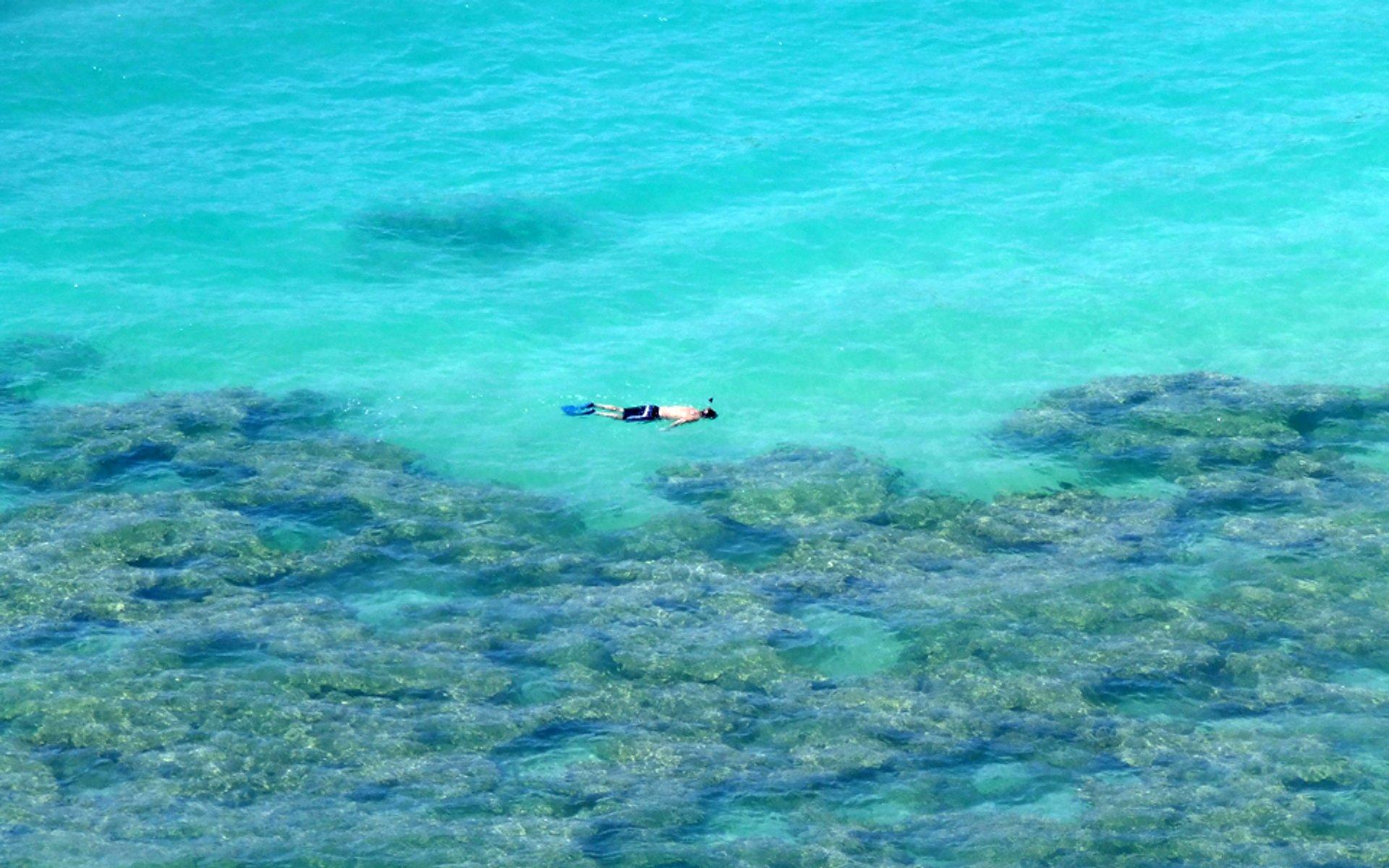 Snorkeling in Hawaii 2019 - Best Time