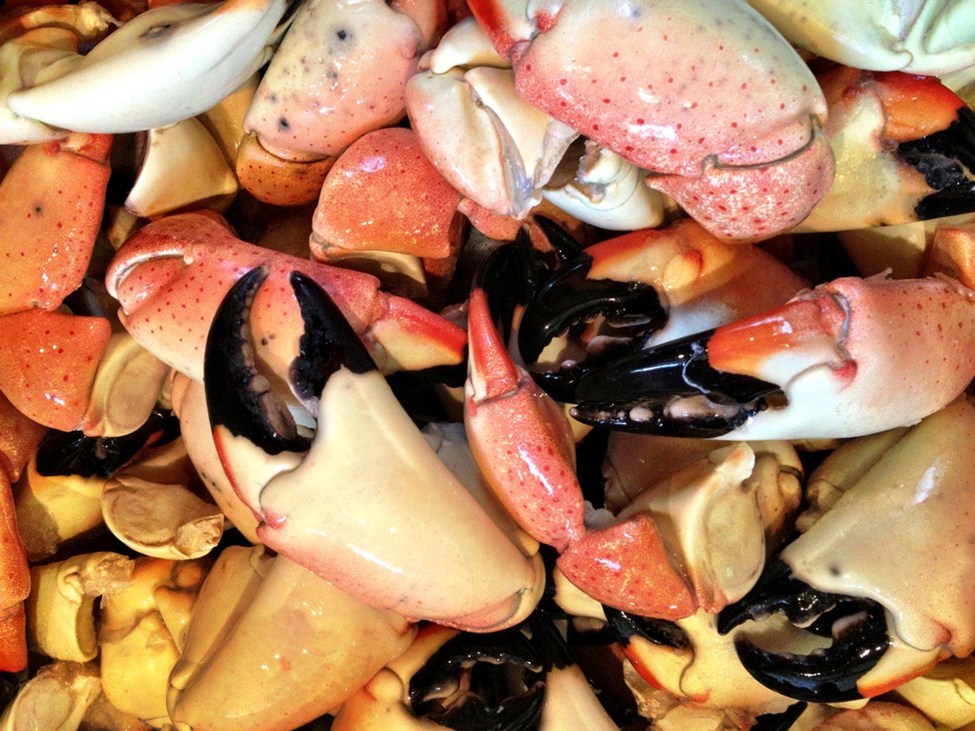 Stone Crab Season in Miami - Best Season 2020