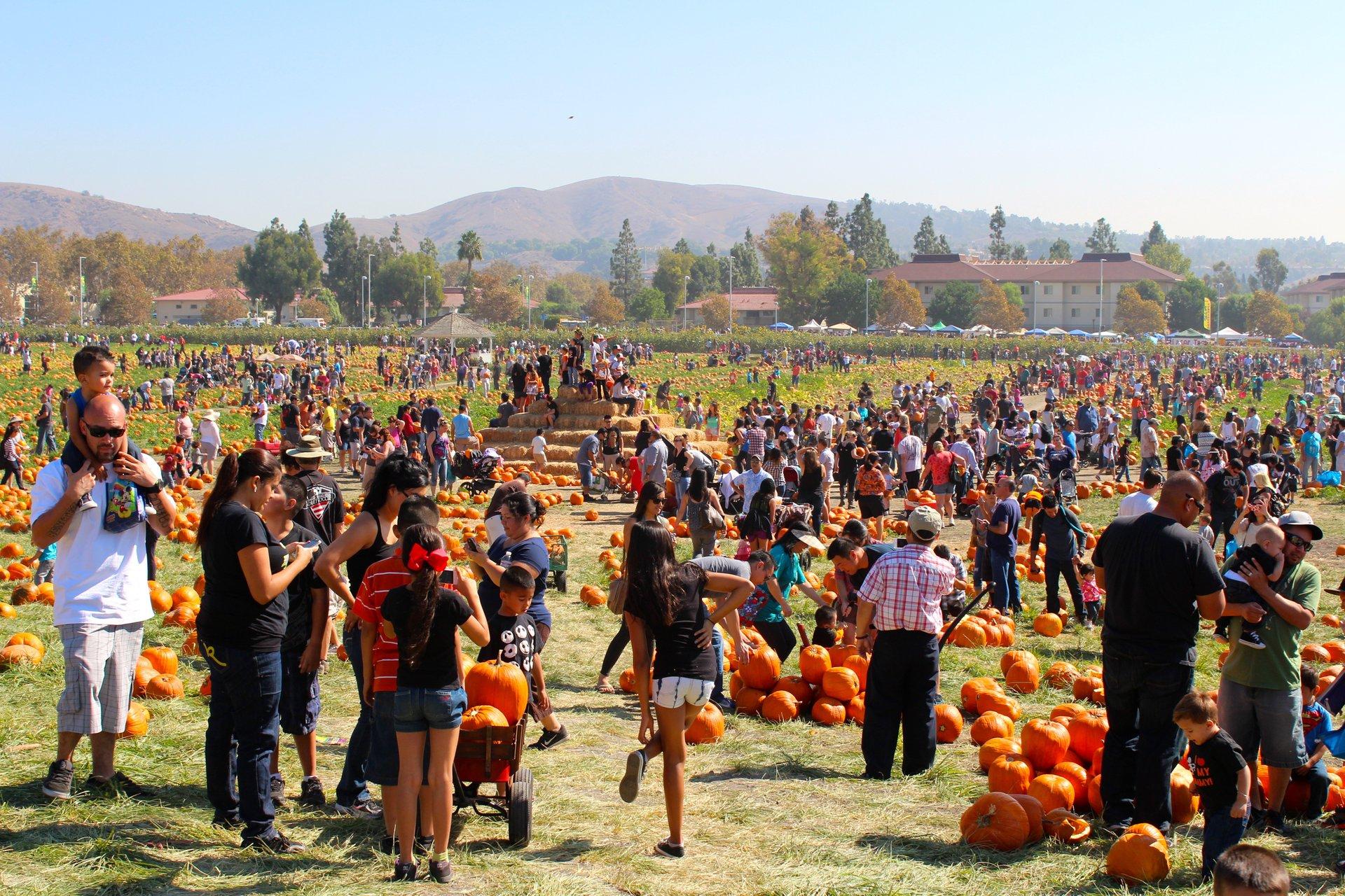 Cal Poly Pomona Pumpkin Festival in Los Angeles - Best Season 2020