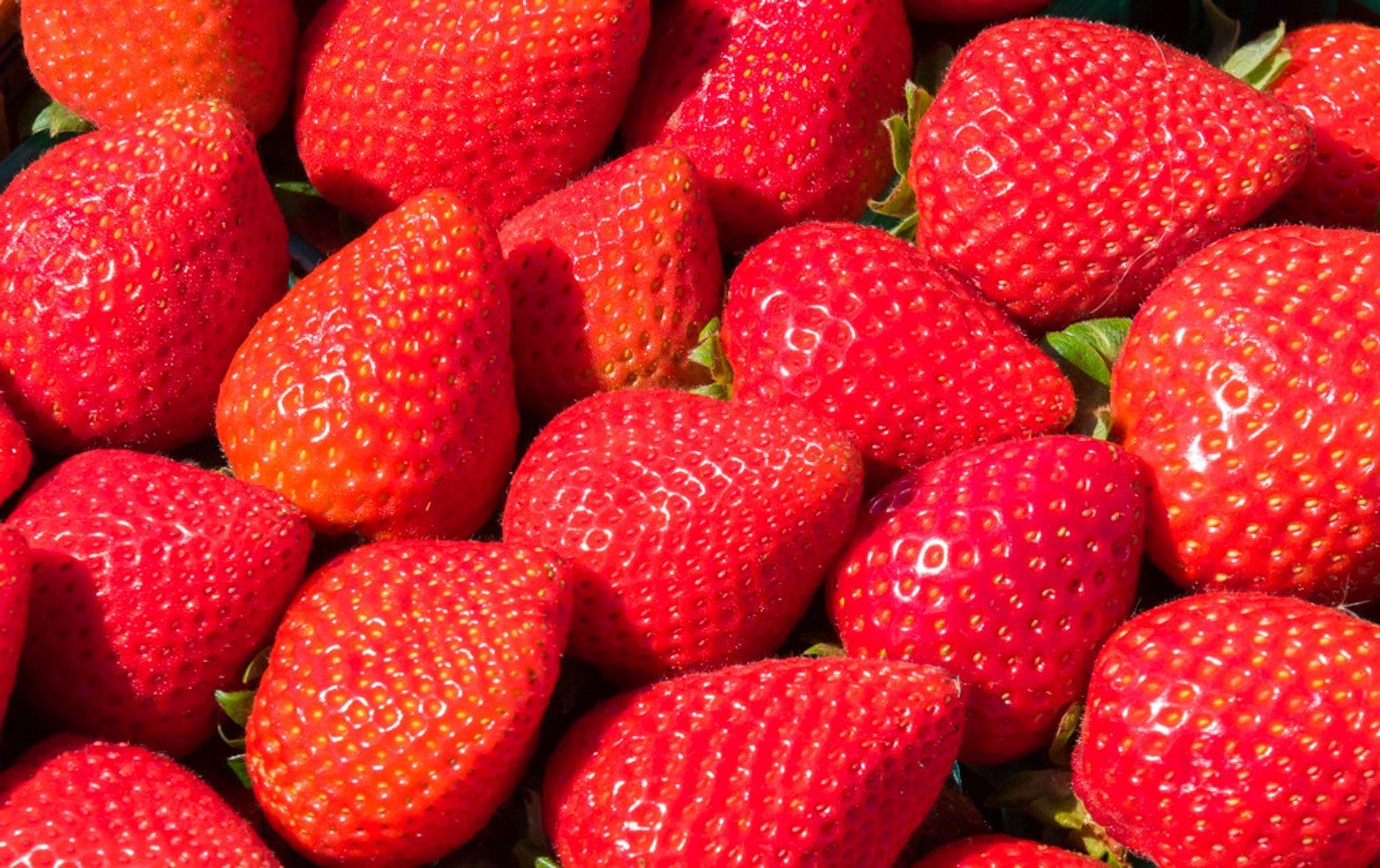California Strawberry Festival in California 2019 - Best Time