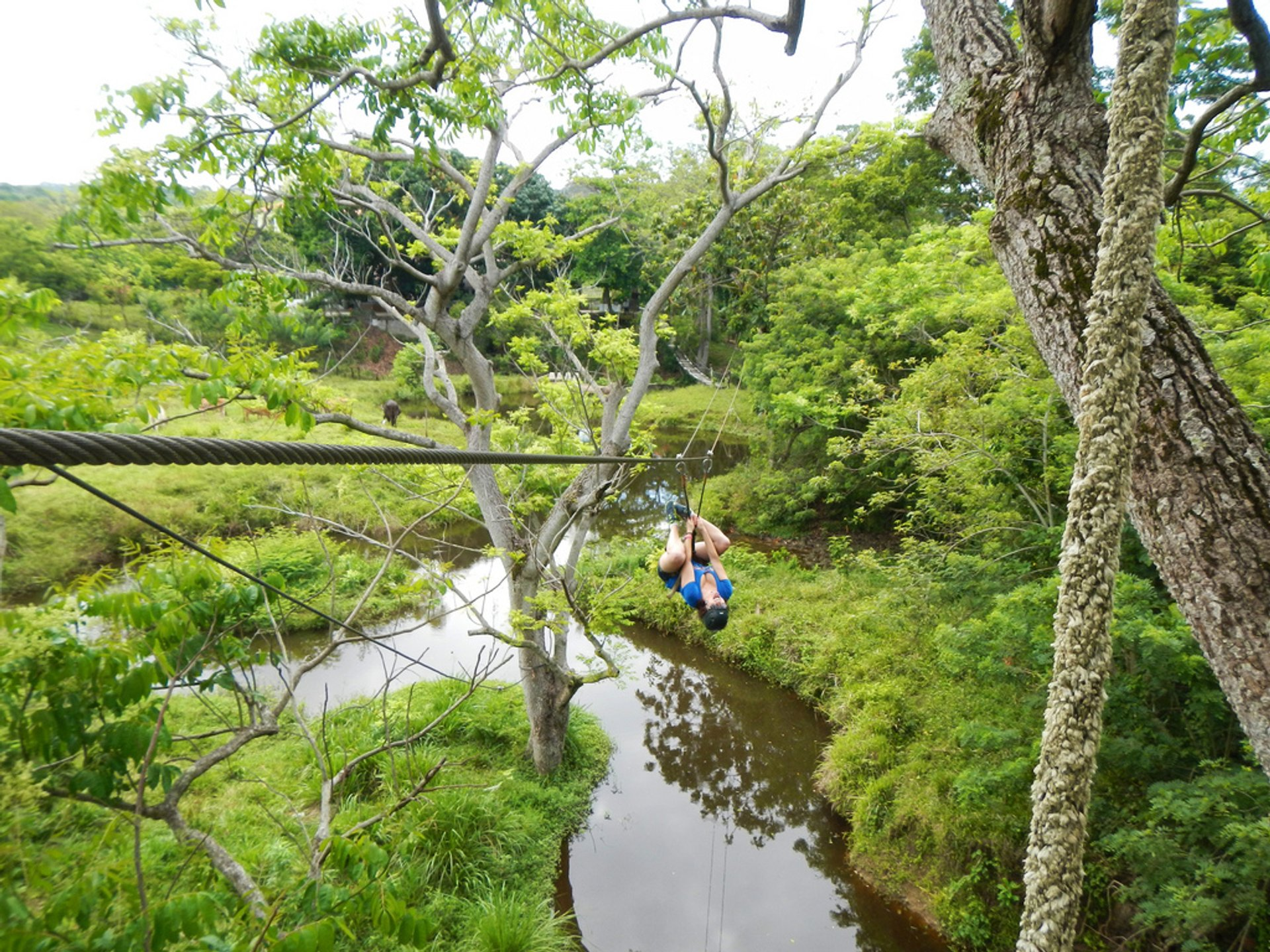 Best time for Ziplining on Roatán in Honduras 2020