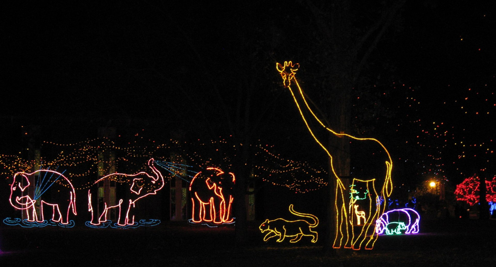 Denver Zoo Lights 2020