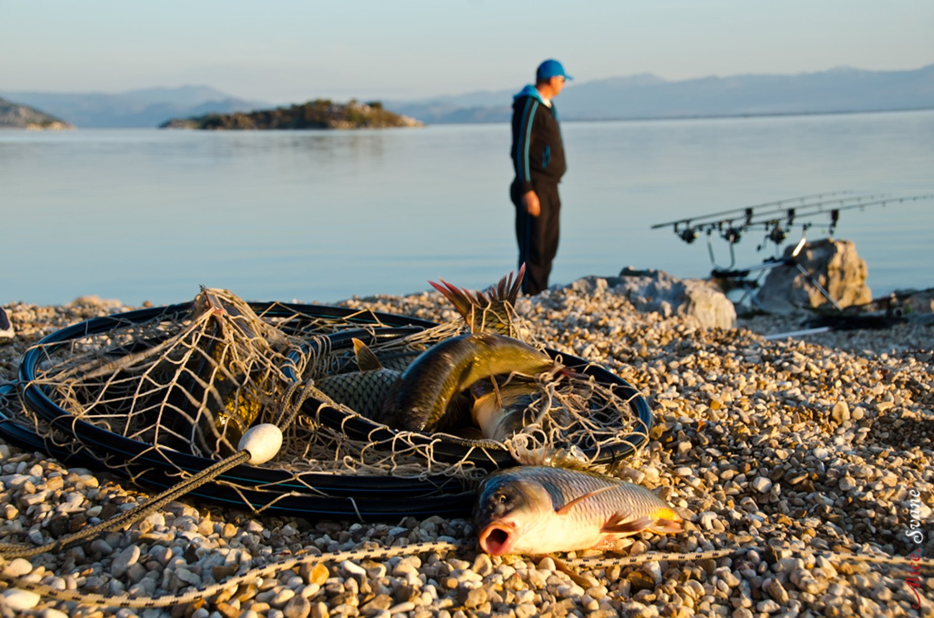 Fishing on Skadar Lake (Skadarsko Jezero) 2020