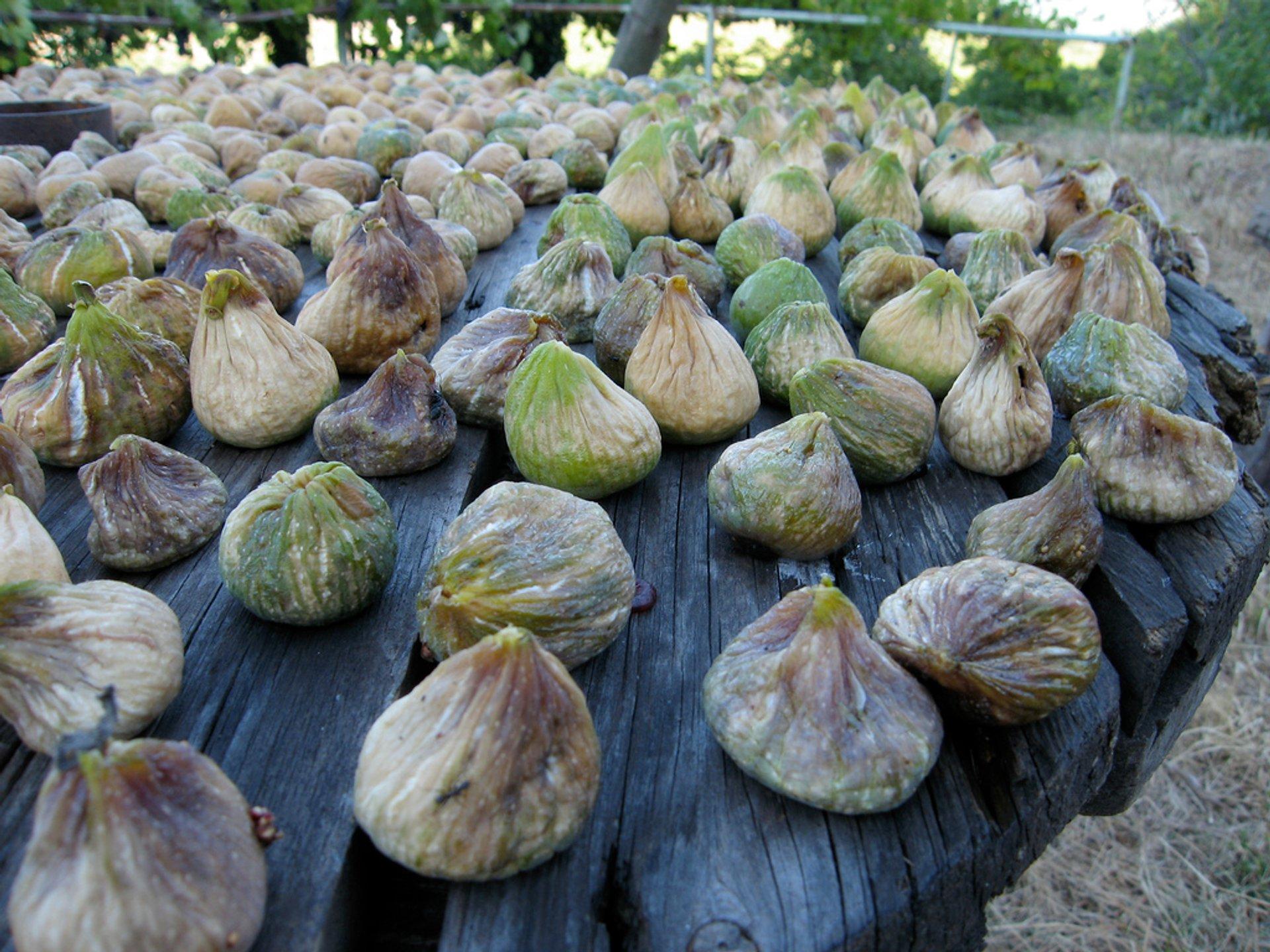 Figs in Montenegro - Best Season 2020