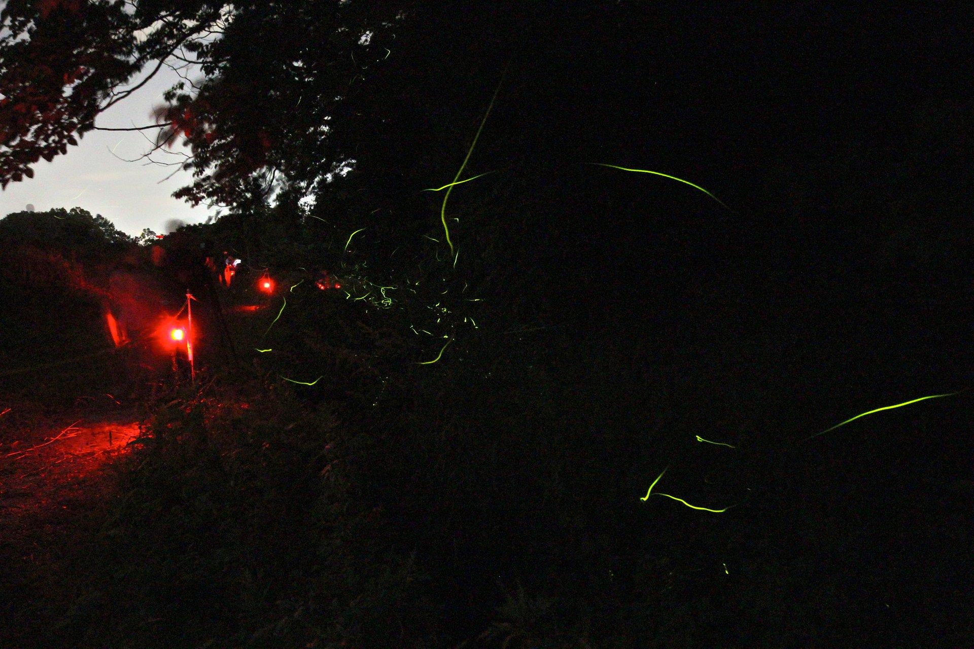 Best time for Firefly Festivals (Hotaru Matsuri) in Japan 2020